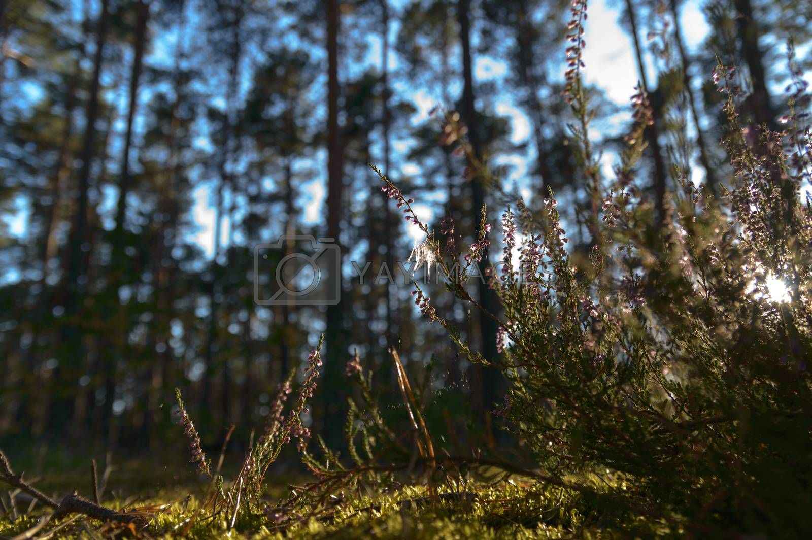 Sunlight in the green forest, nature series