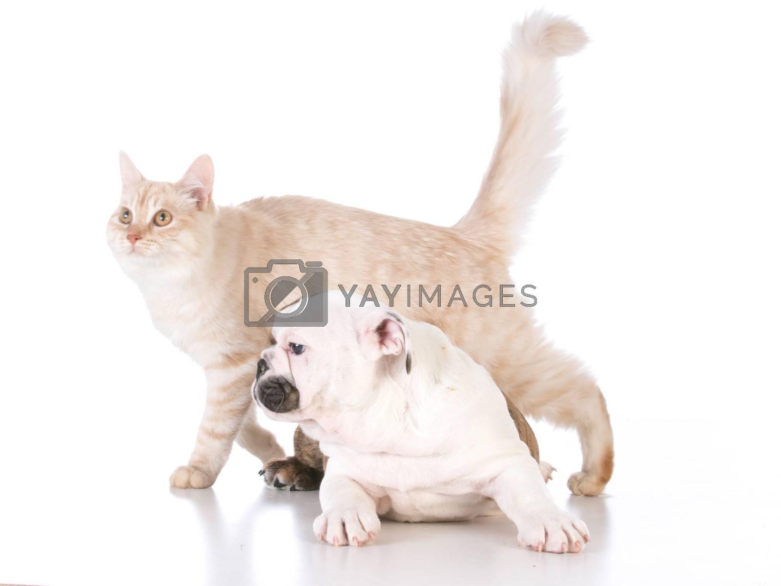 dog and cat isolated on white background