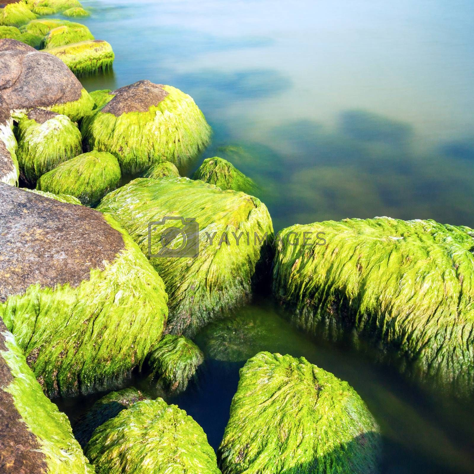 Seashore stones covered with moss and seaweed