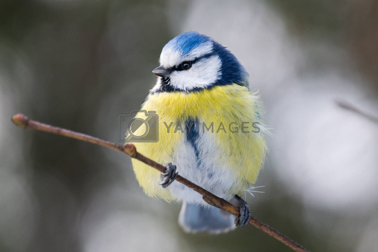 The photo shows a bird on a branch