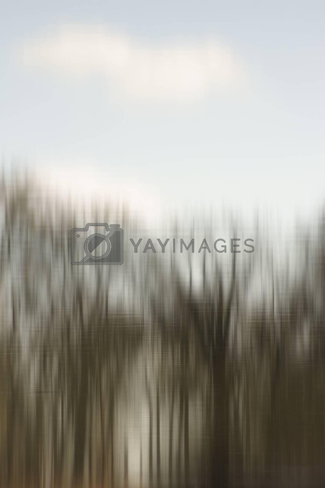 The abstract blur and reflection of in row standing trees on the water surface.