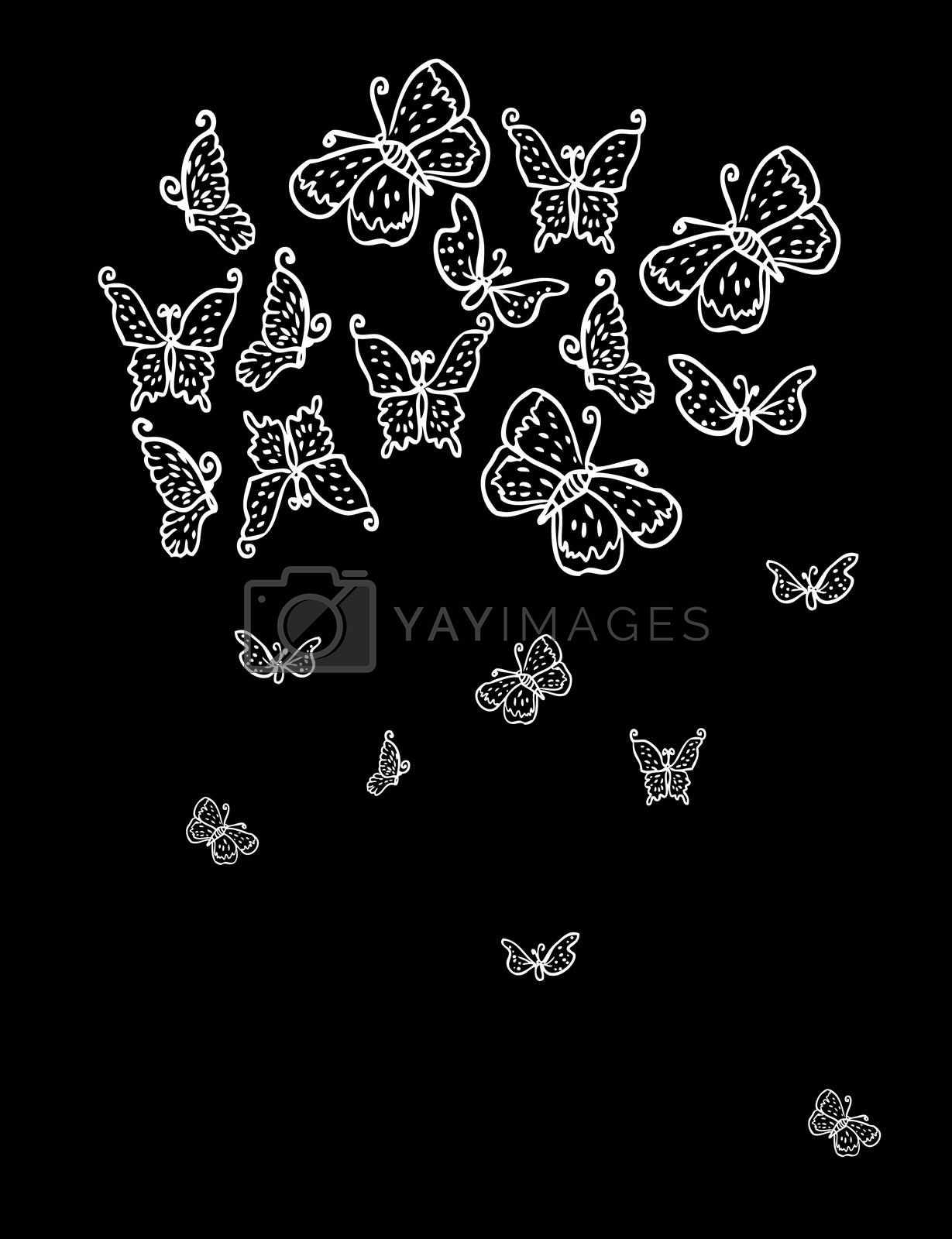 White butterfly isolated on black background