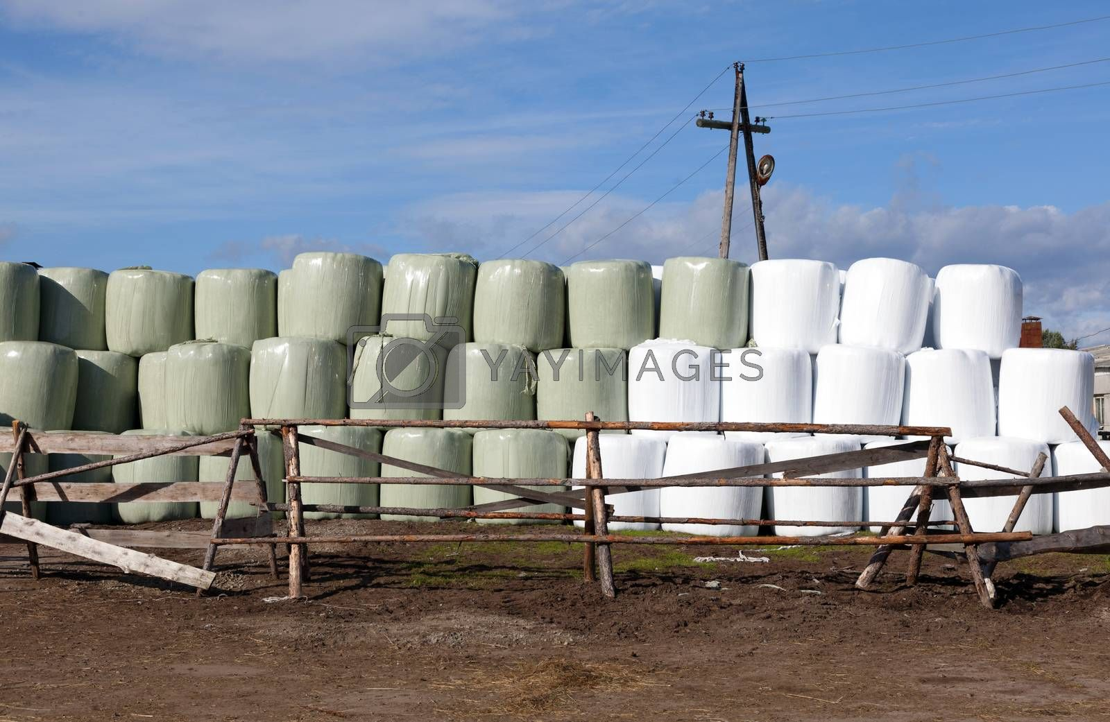 Hay bales packed in white plastic. Agricultural area in the region of Umba Russia.