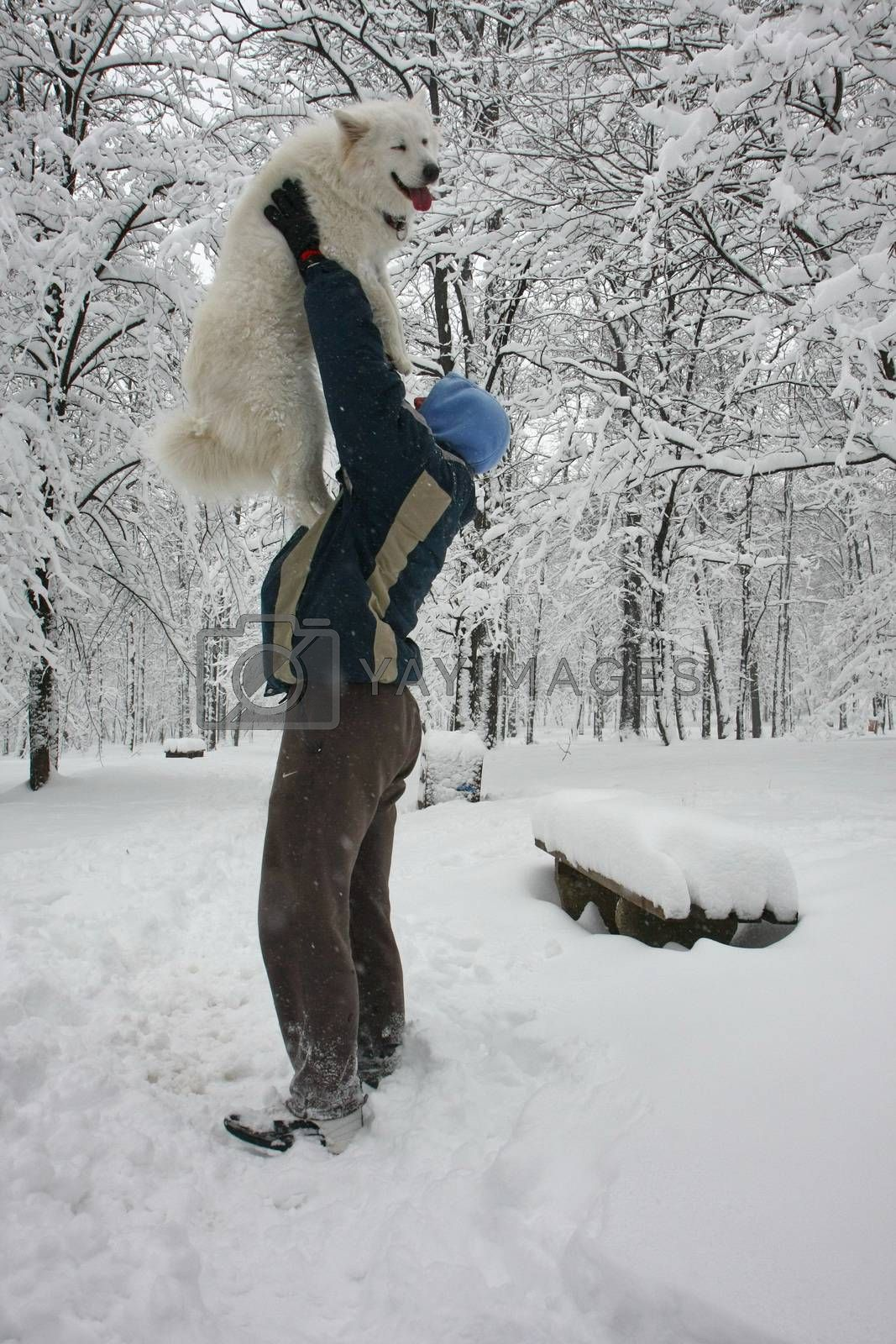 Man playing with Samoyed in the forest covered with snow