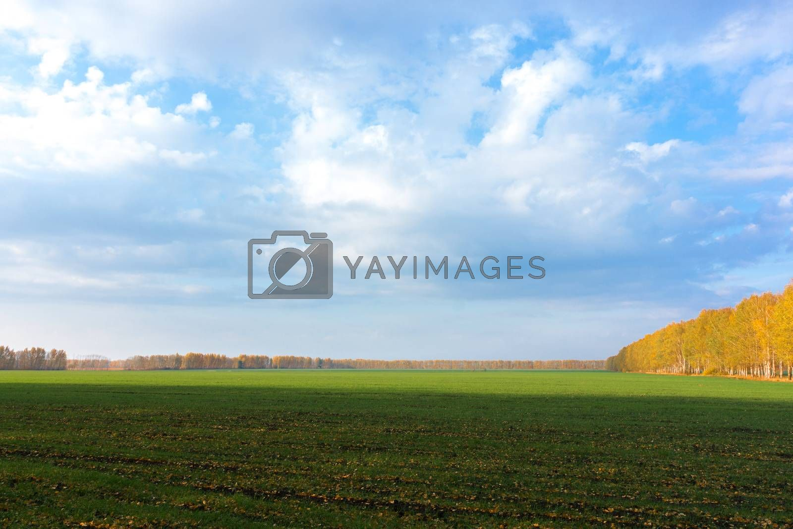 The photo shows the green grass in the field