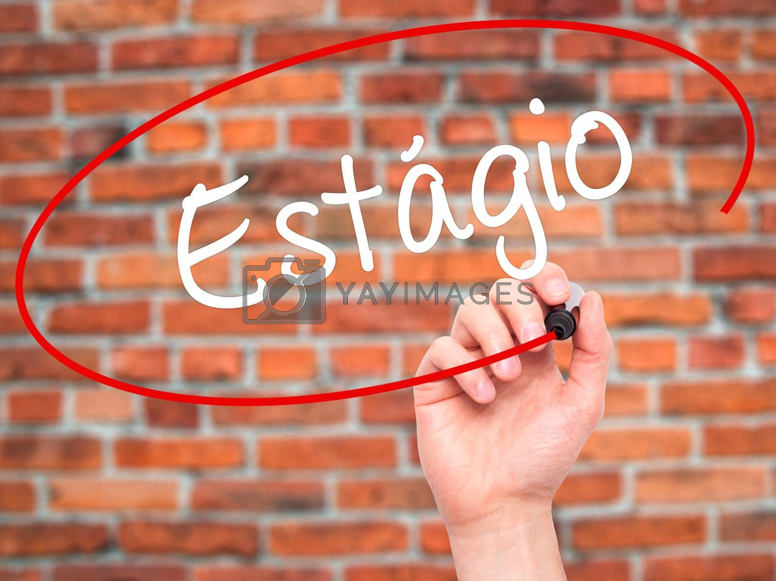 Man Hand writing Est�¡gio (Internship in Portuguese)  with black marker on visual screen. Isolated on bricks. Business, technology, internet concept.