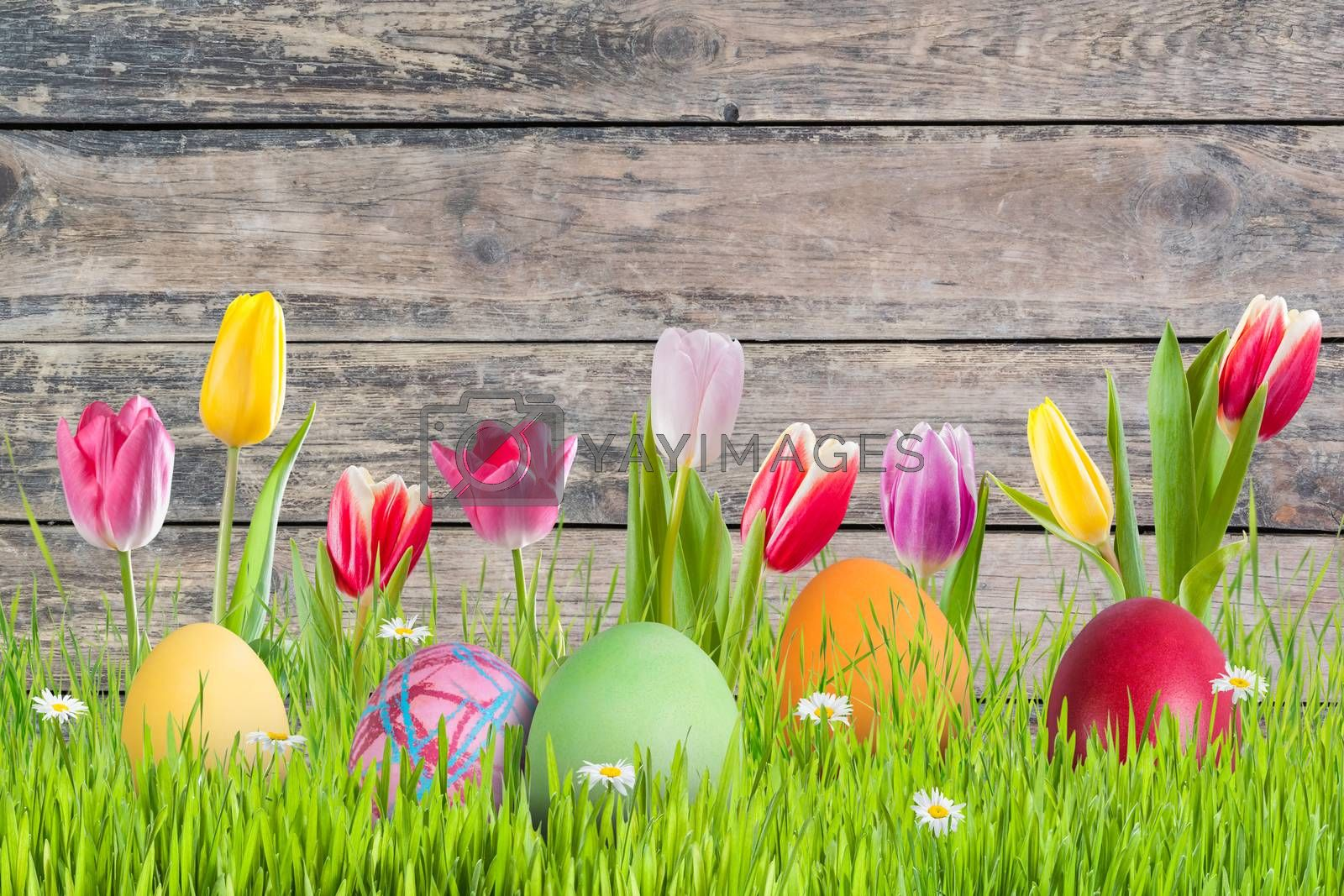 Easter background with eggs in grass and flowers, wooden backdrop