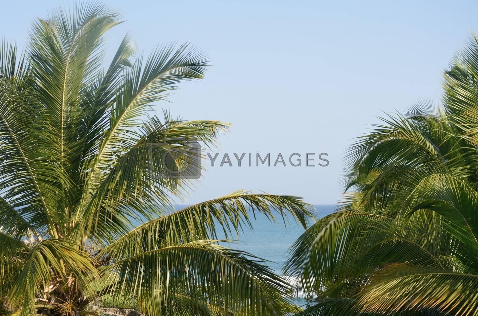 View of sea through Palm Trees
