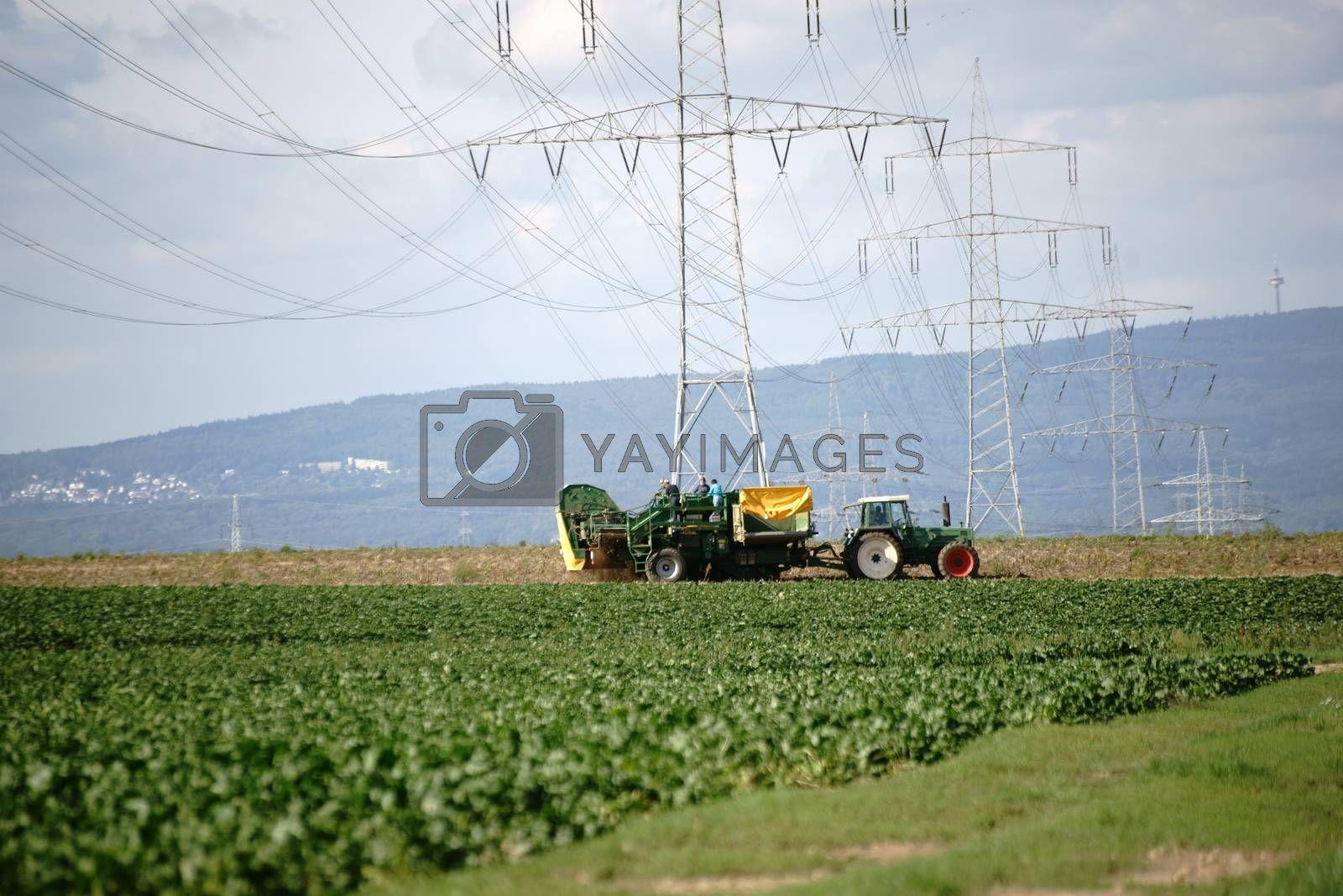 A tractor with a plow and harvest trailer on the potato field.