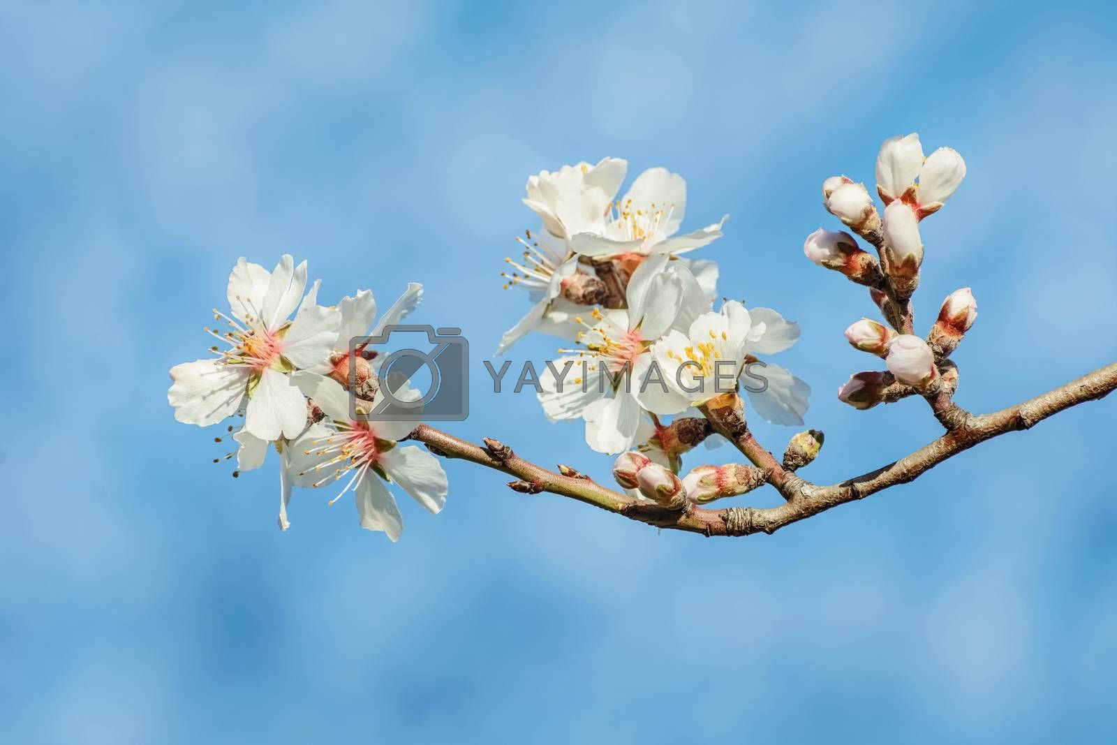 Spring Flowers over the Blue Background