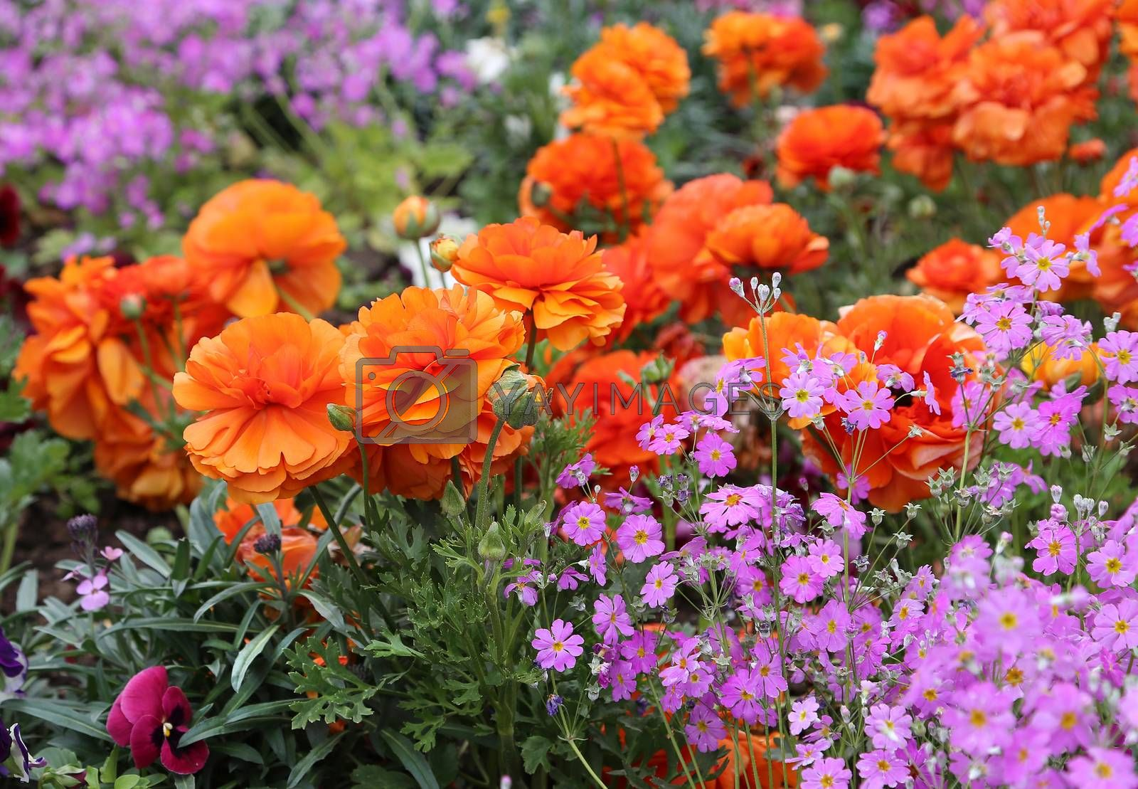 Beautiful nature background with bright flowers