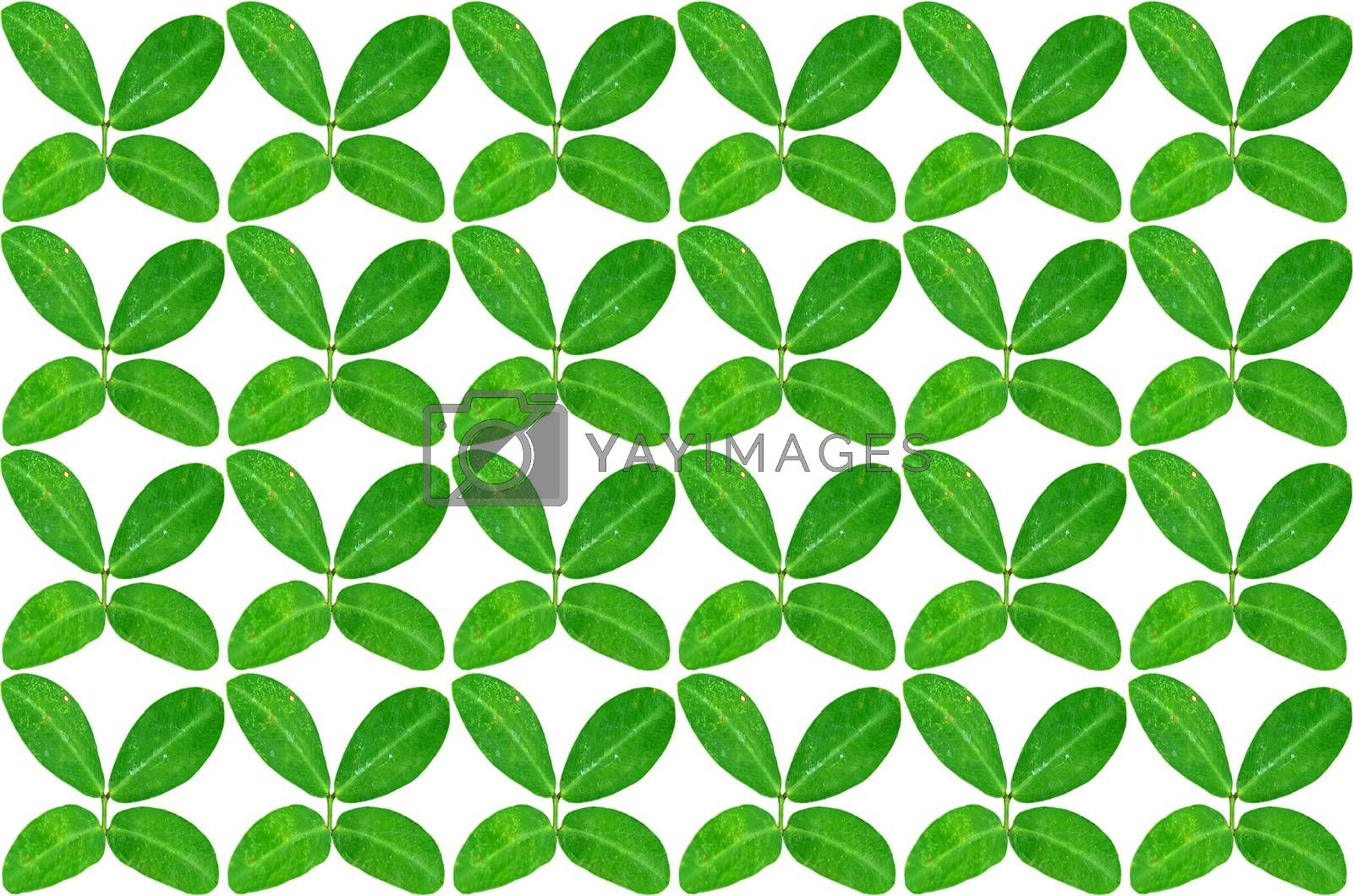 Royalty free image of green leaves  by raweenuttapong
