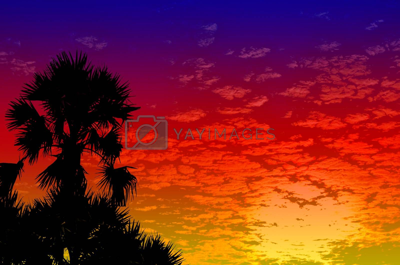Royalty free image of palm trees sunset golden blue sky backlight by raweenuttapong