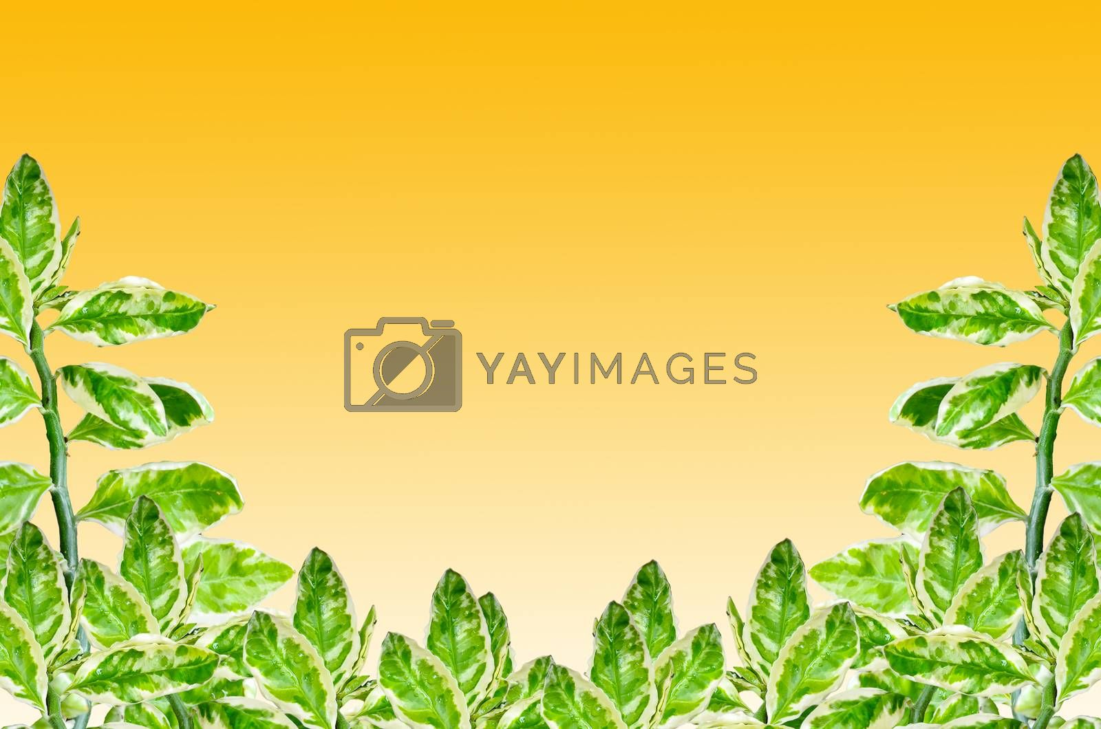 Royalty free image of Redbird Cactus by raweenuttapong