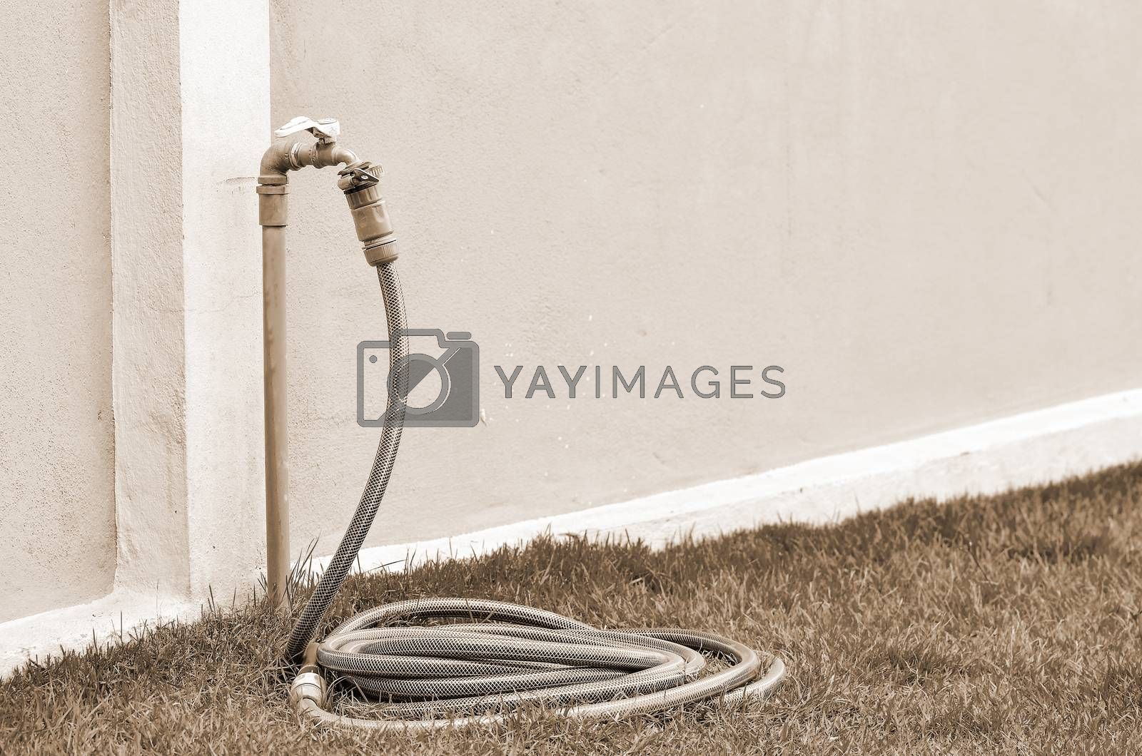 Royalty free image of Reel of hose pipe and spraying head by raweenuttapong