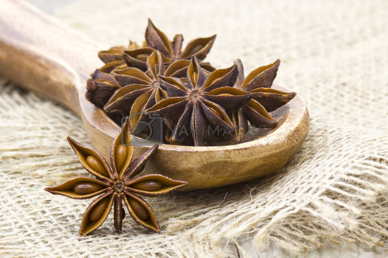 star anise on wooden spoon by miradrozdowski