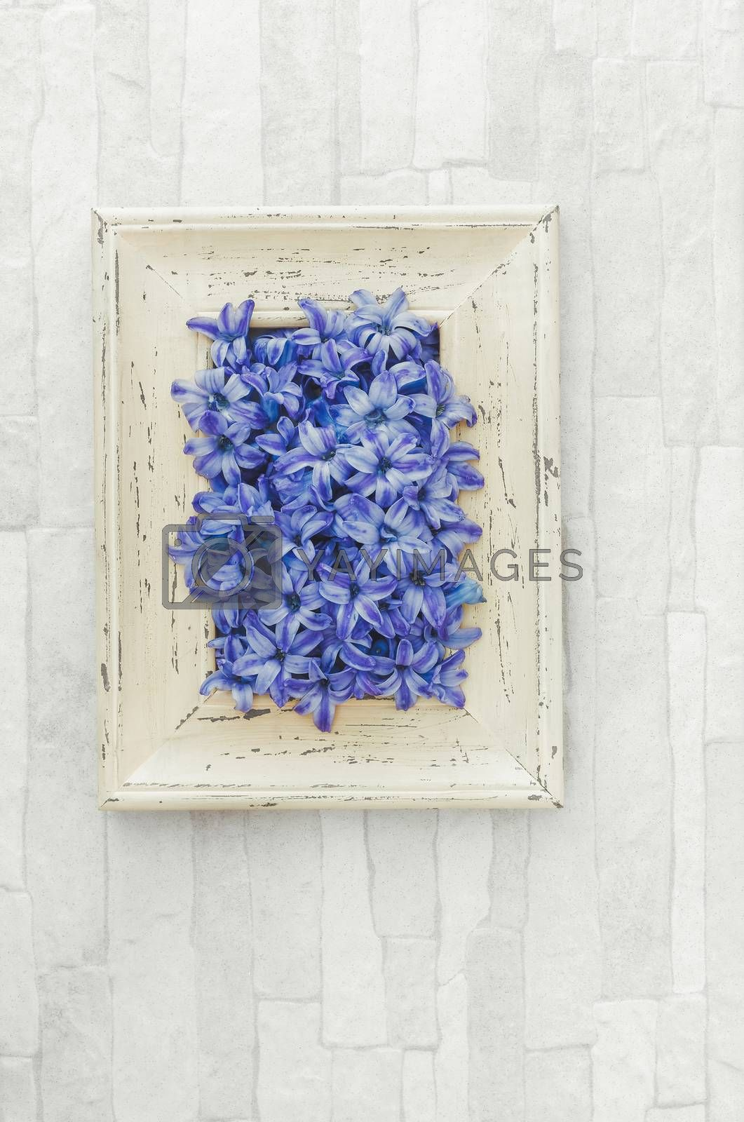 Spring Hyacinths petals in a rustic frame. Overhead view with retro style processing, blank space