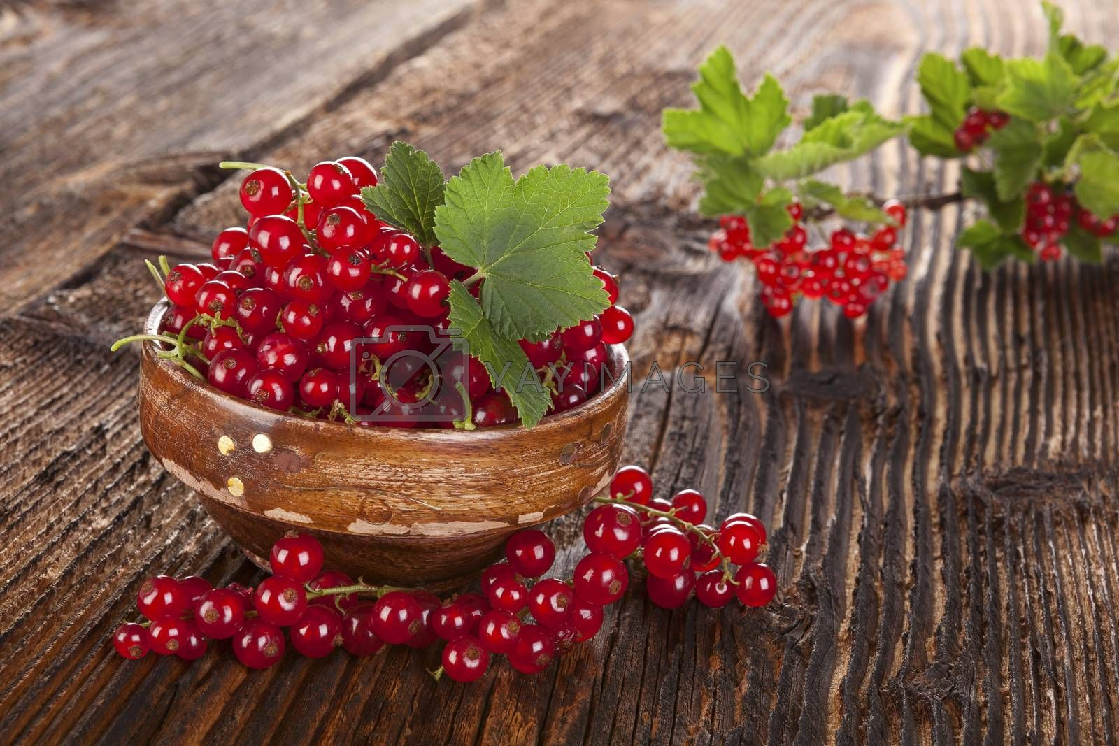 Red currant on wooden background. Healthy summer fruit eating.