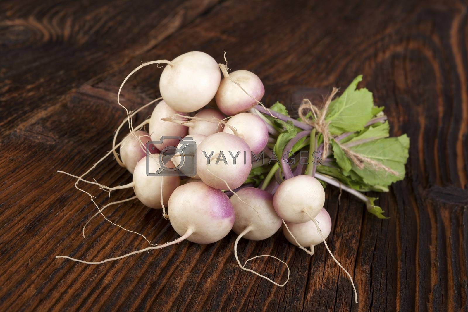 Ripe fresh radish bundle on wooden background. Seasonal organic vegetable harvest. Farmer market.