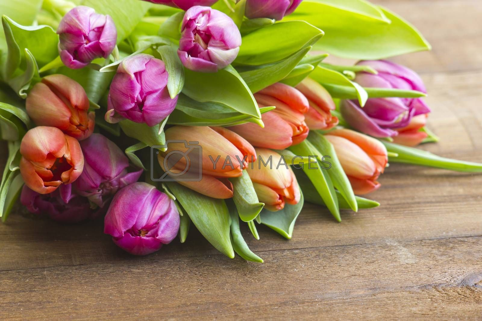 colourful tulips on wooden background