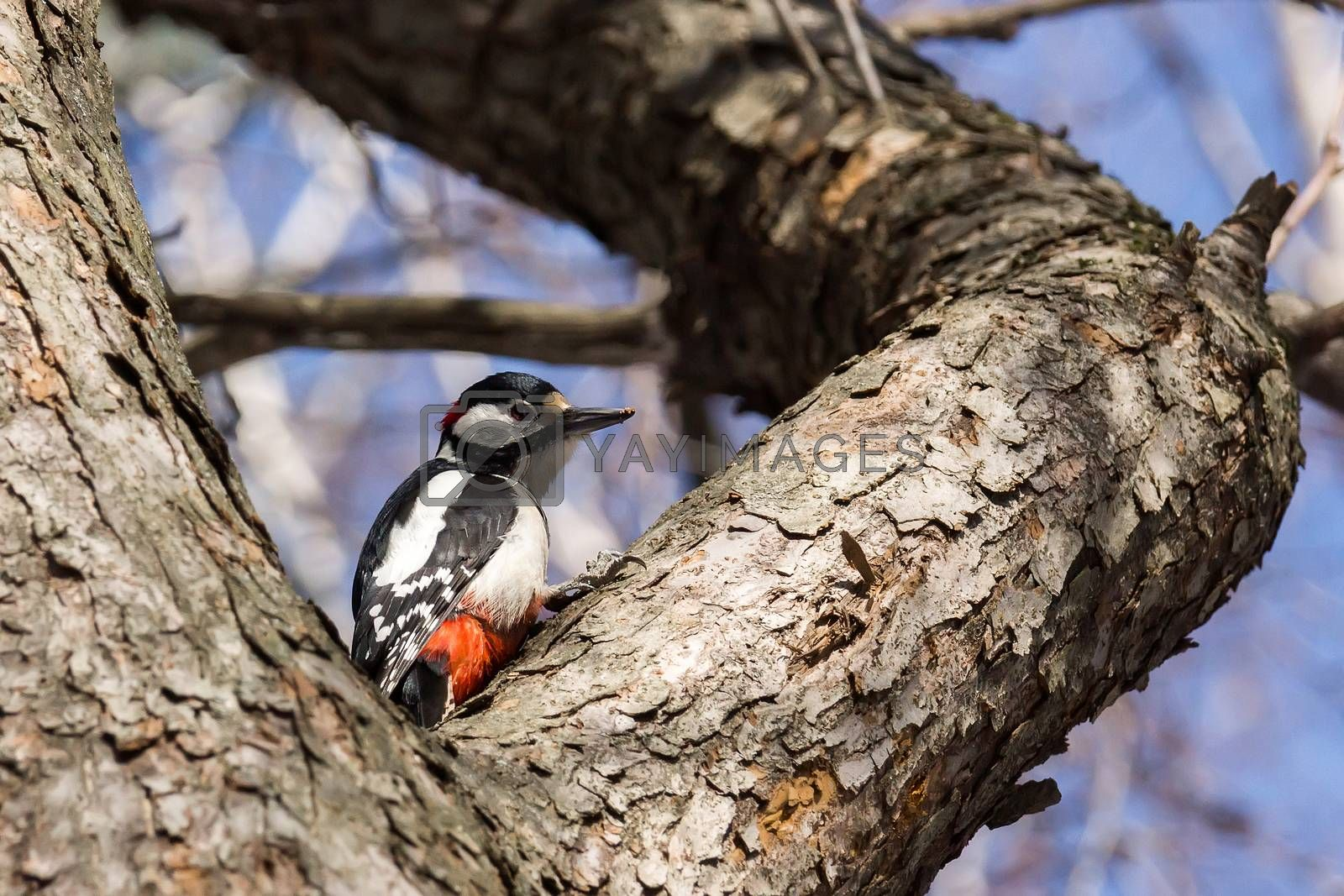 The photo depicts a woodpecker on a tree