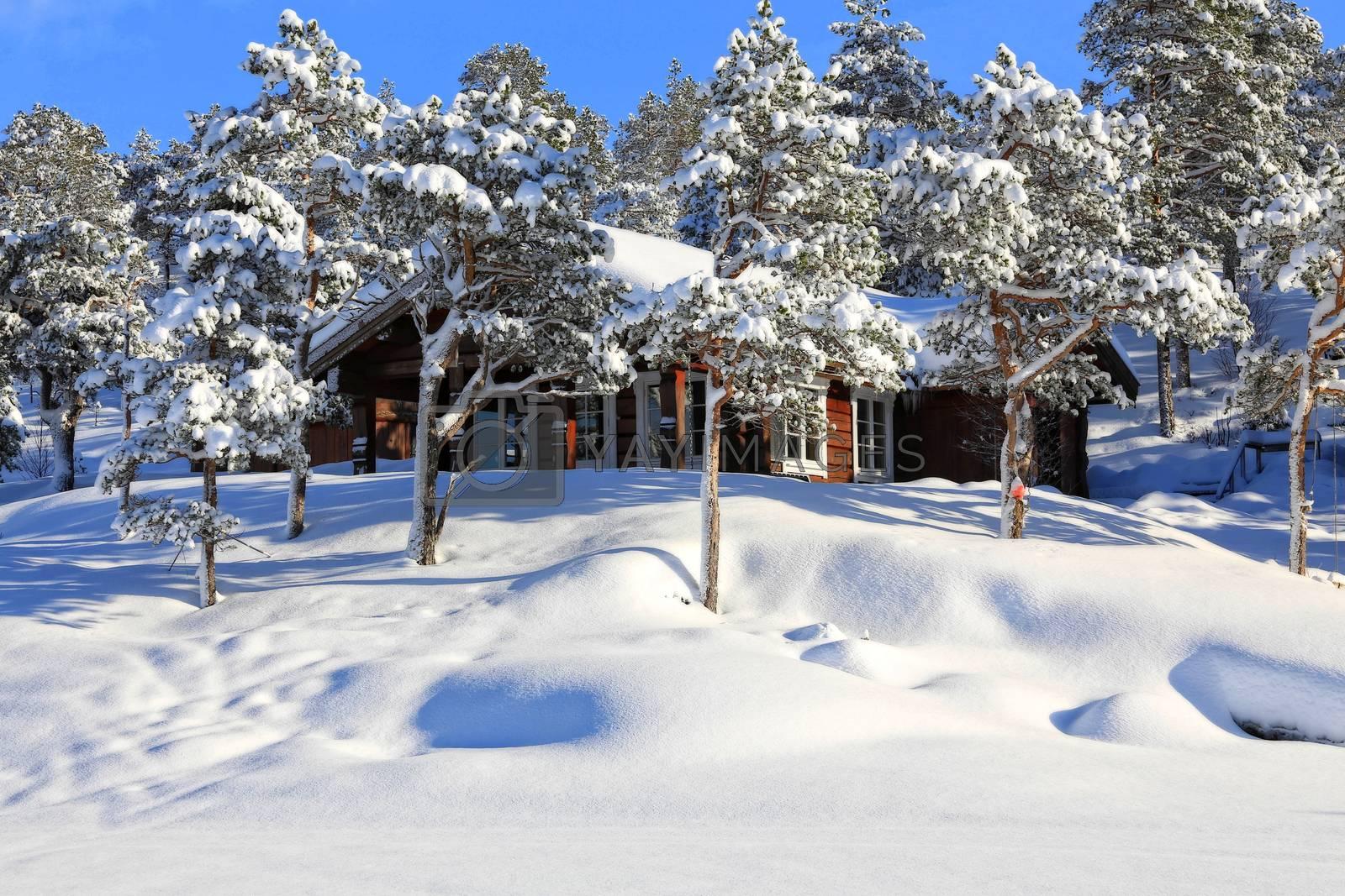 Hytte i vinterland - fra skitur  i indre Brønnøy