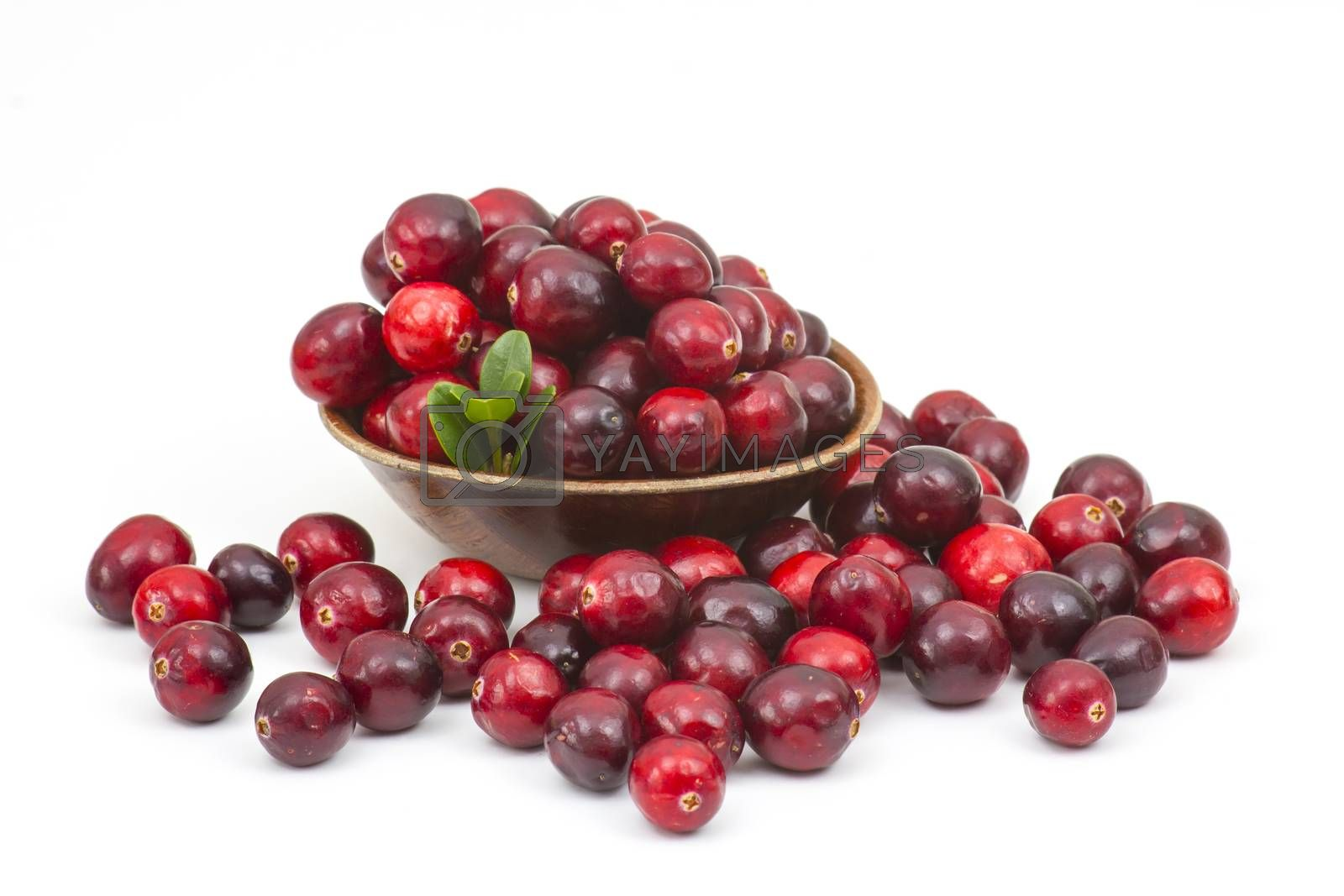 Cranberries in wooden bowl on white background. by miradrozdowski