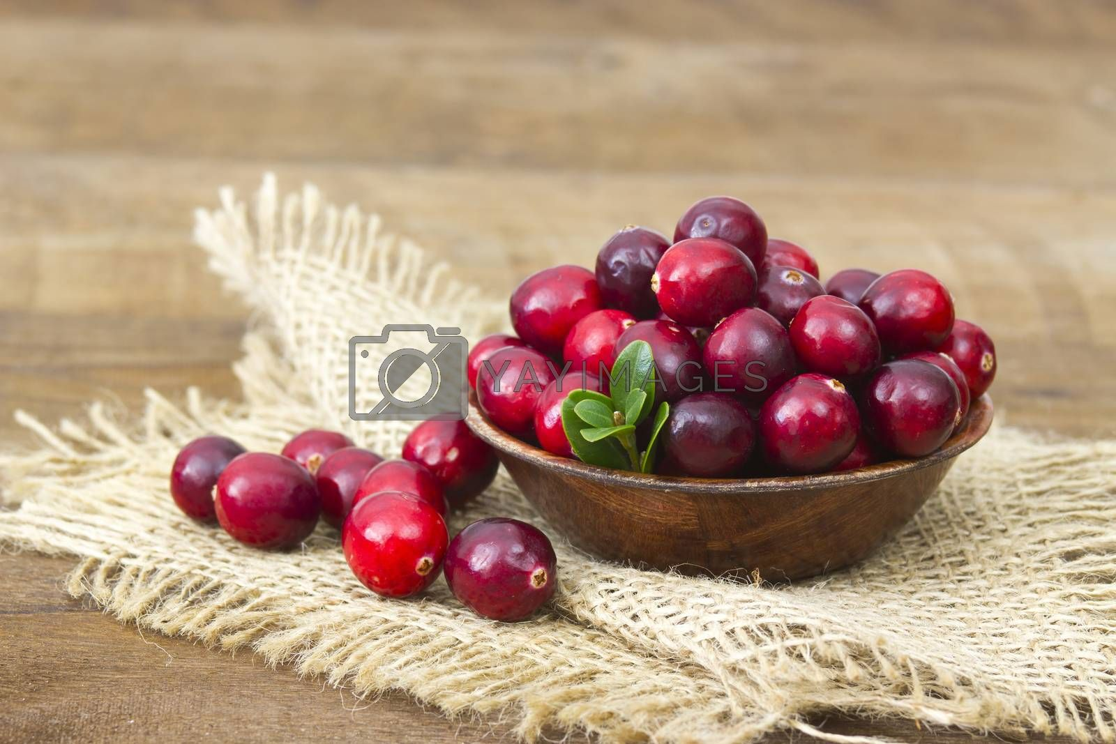 Cranberries in wooden bowl on wooden background.