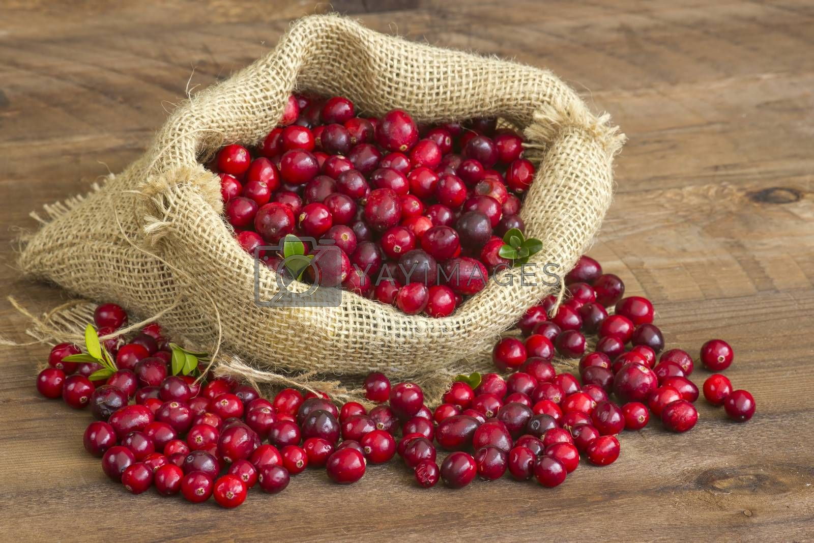 Cranberries in a bag on wooden background.