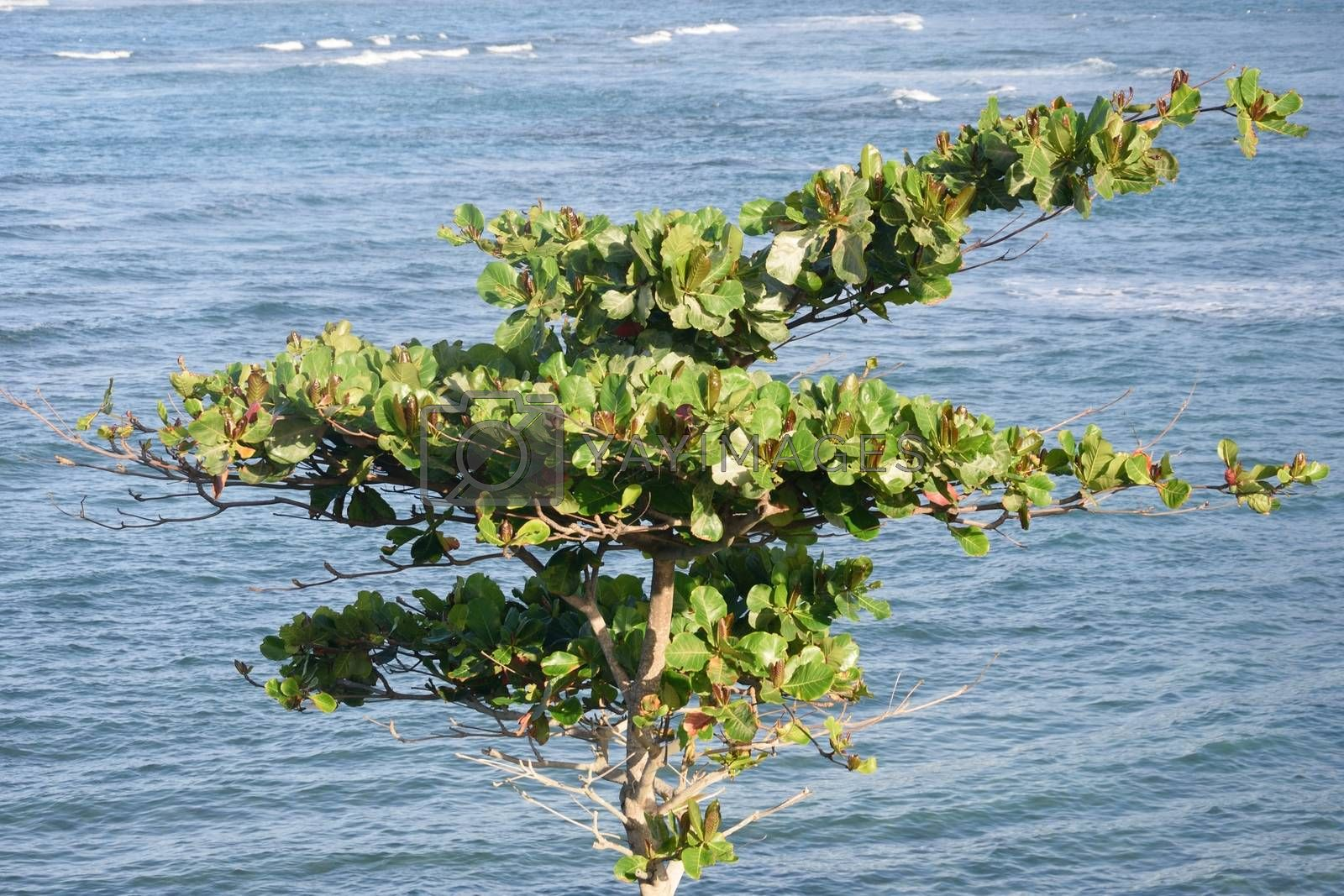 Green Tree with Ocean in Background
