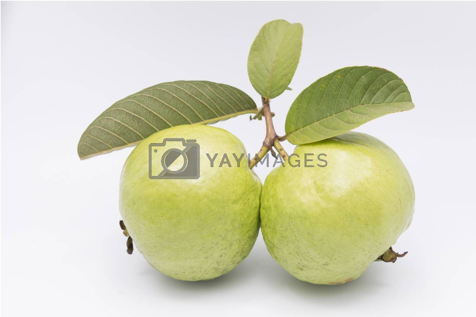 Guavas with leaves on white background