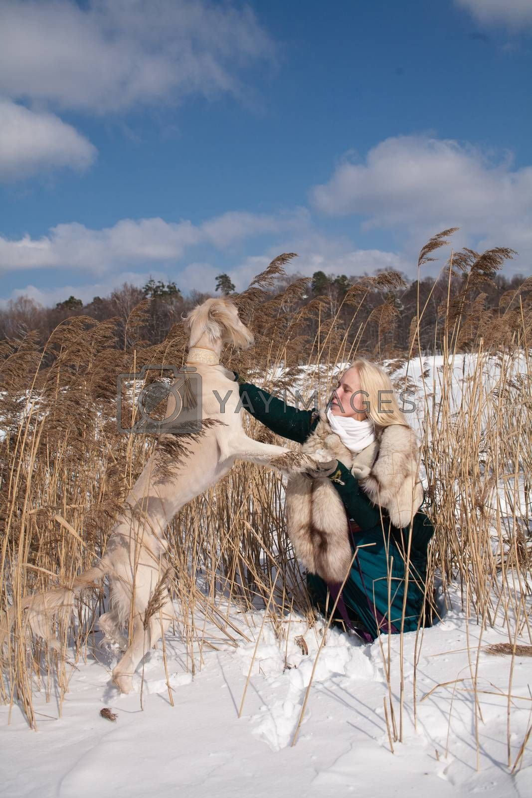 A blonde girl and a saluki in canes in winter