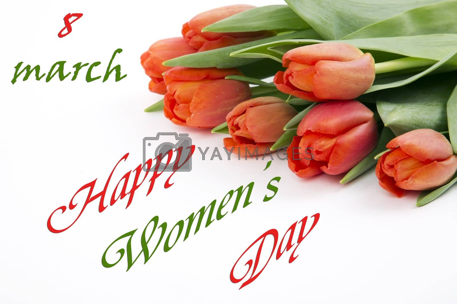 Happy Womens Day - red tulips on a white background