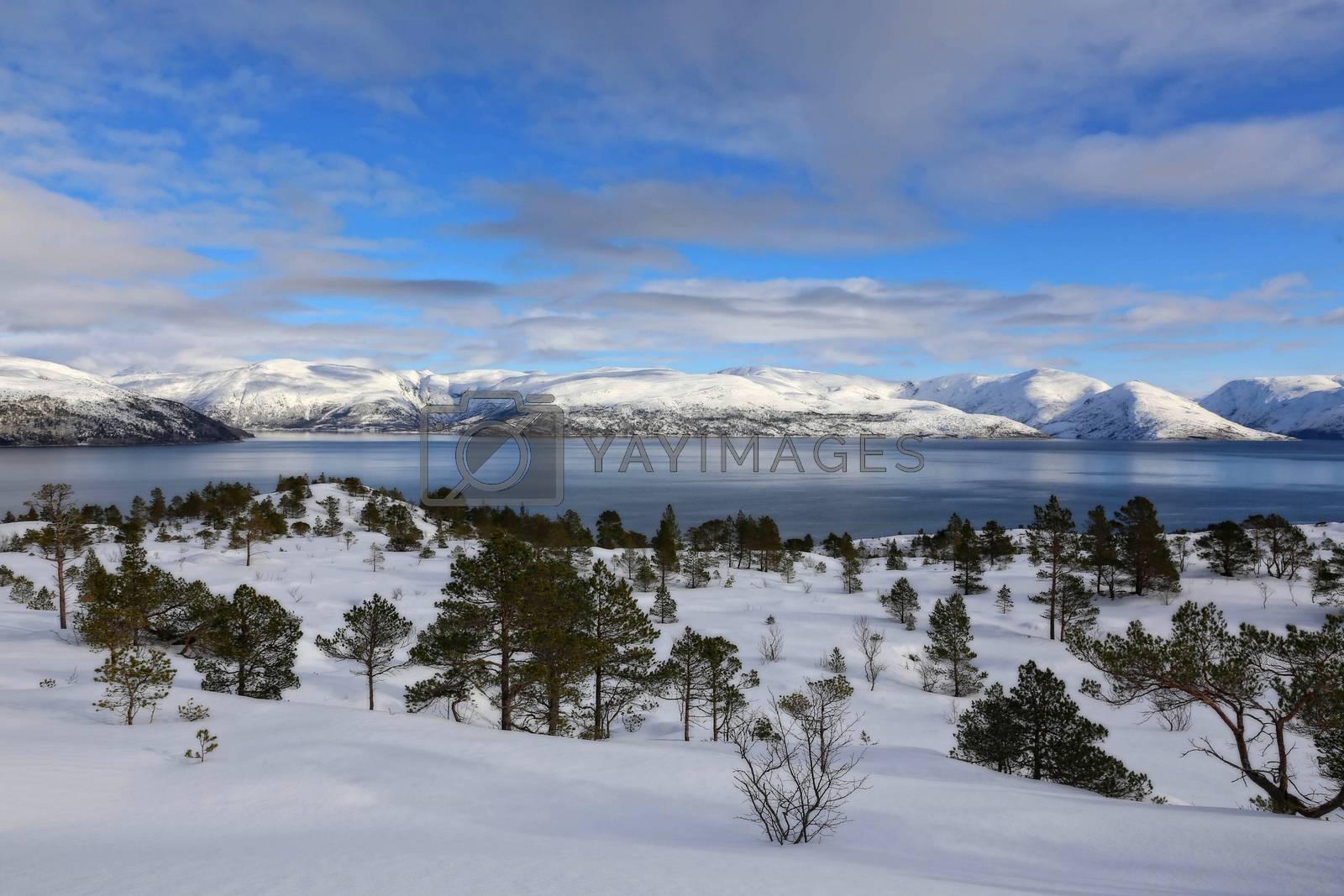 Skitur fra Åsheia,salbuhatten,Skomovikvatnan i Brønnøy