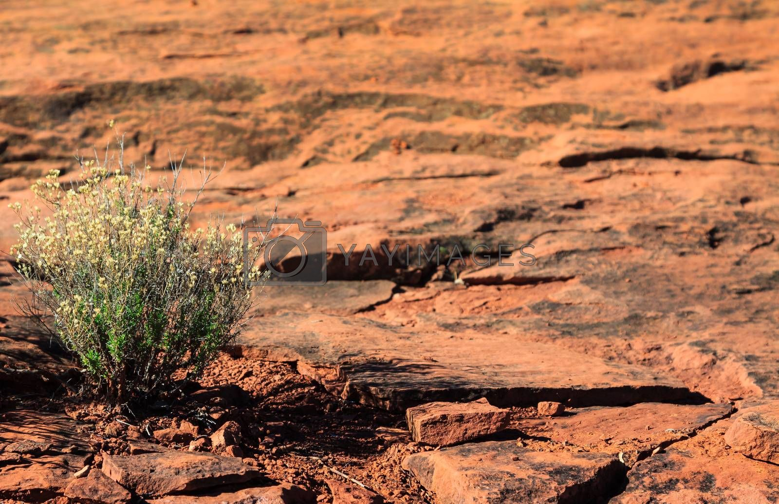 Red Rock Plants by TravisPhotoWorks