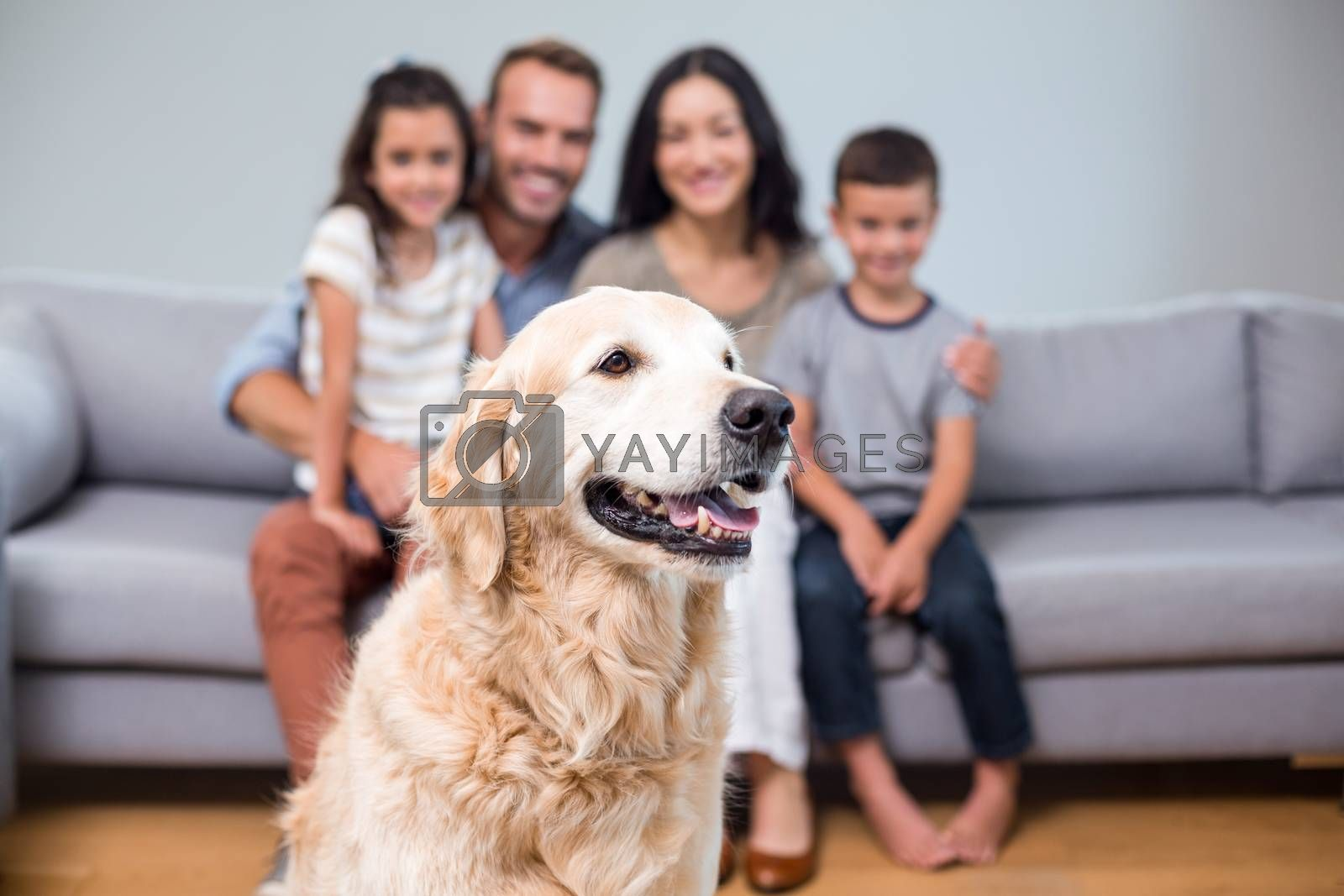 Pet in living room and family sitting on sofa in background