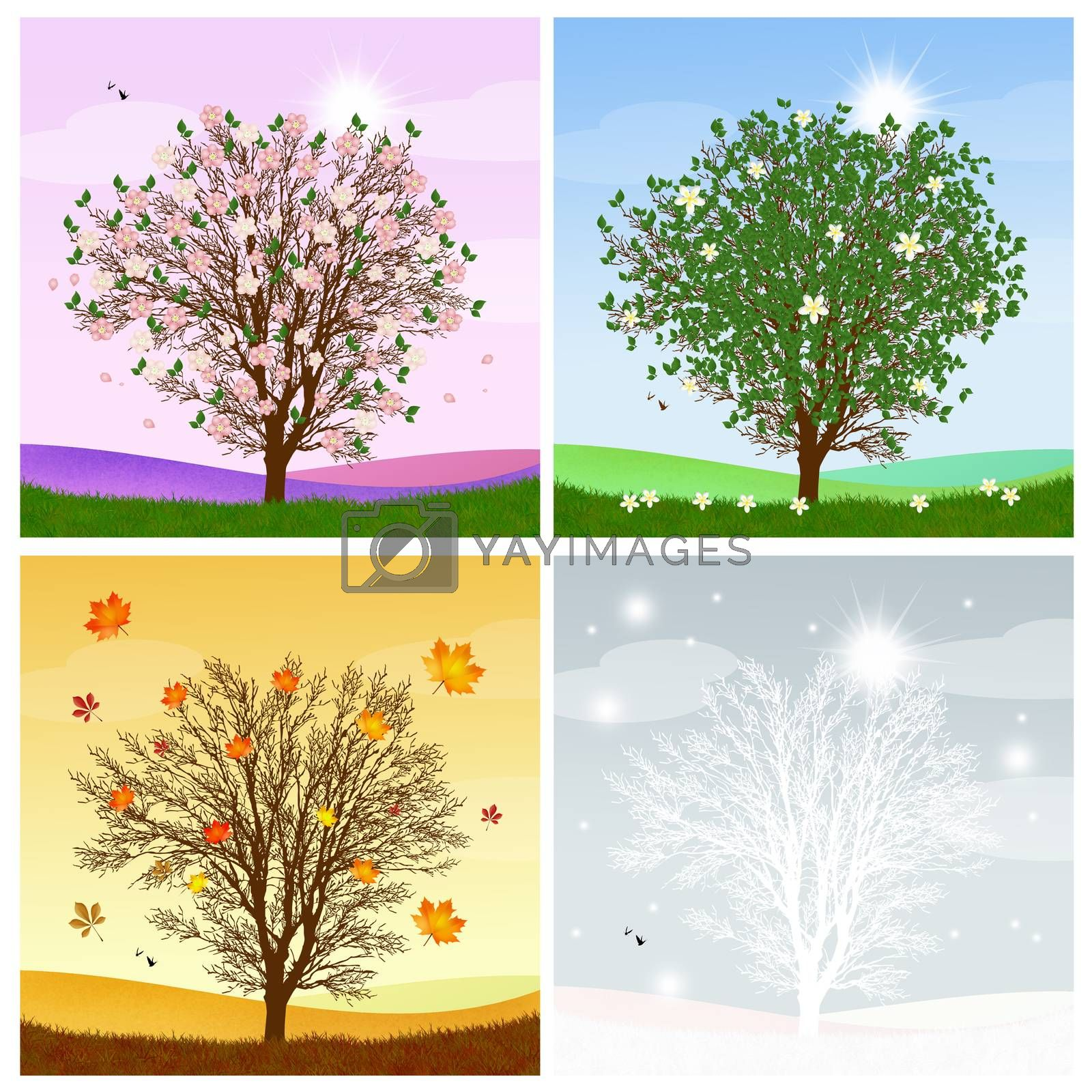 illustration of tree in the four season