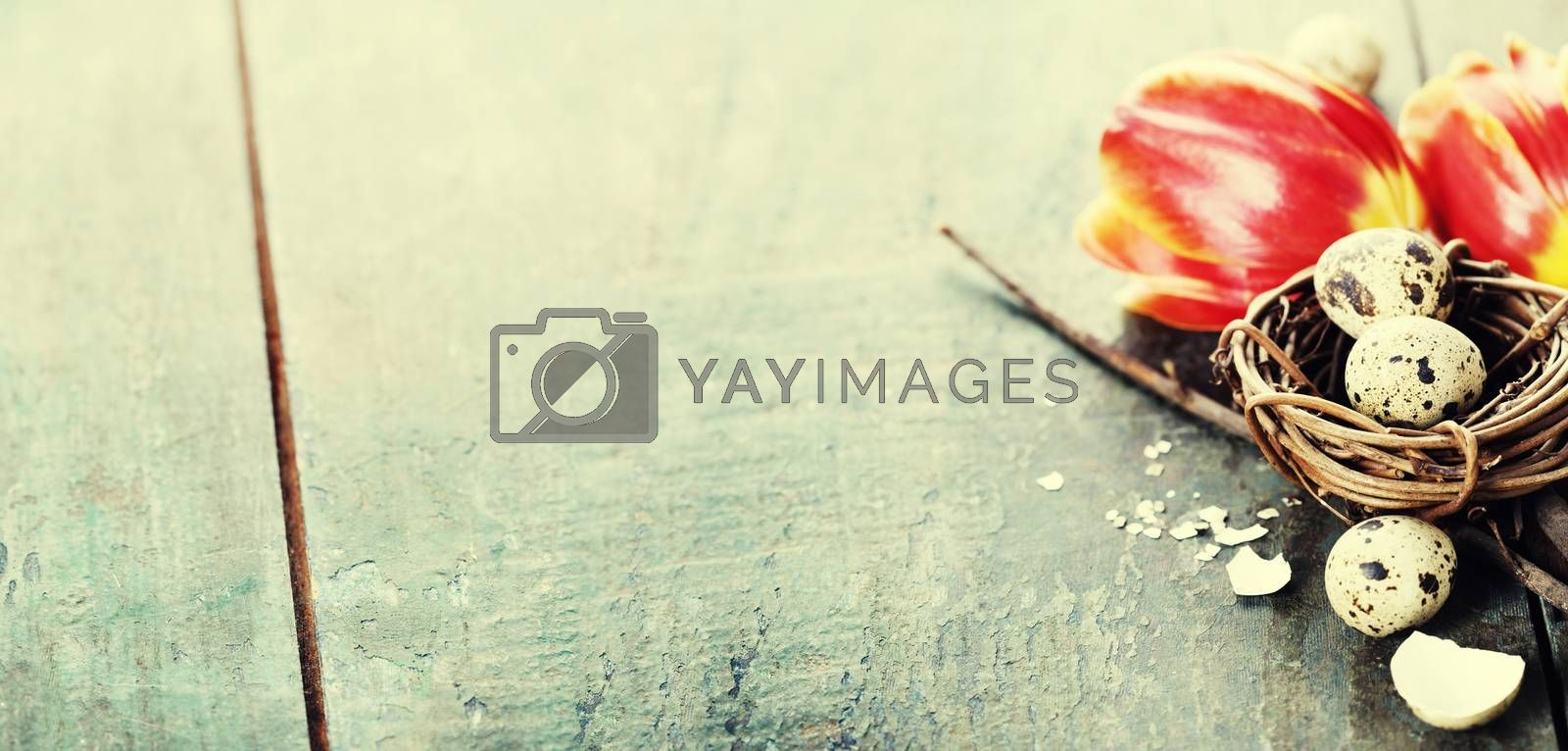 Easter composition with tulips, eggs and nest on vintage wooden background