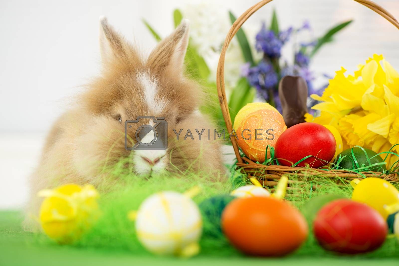 Easter Bunny with eggs in basket and flower. Selective focus. Focus on rabbit.