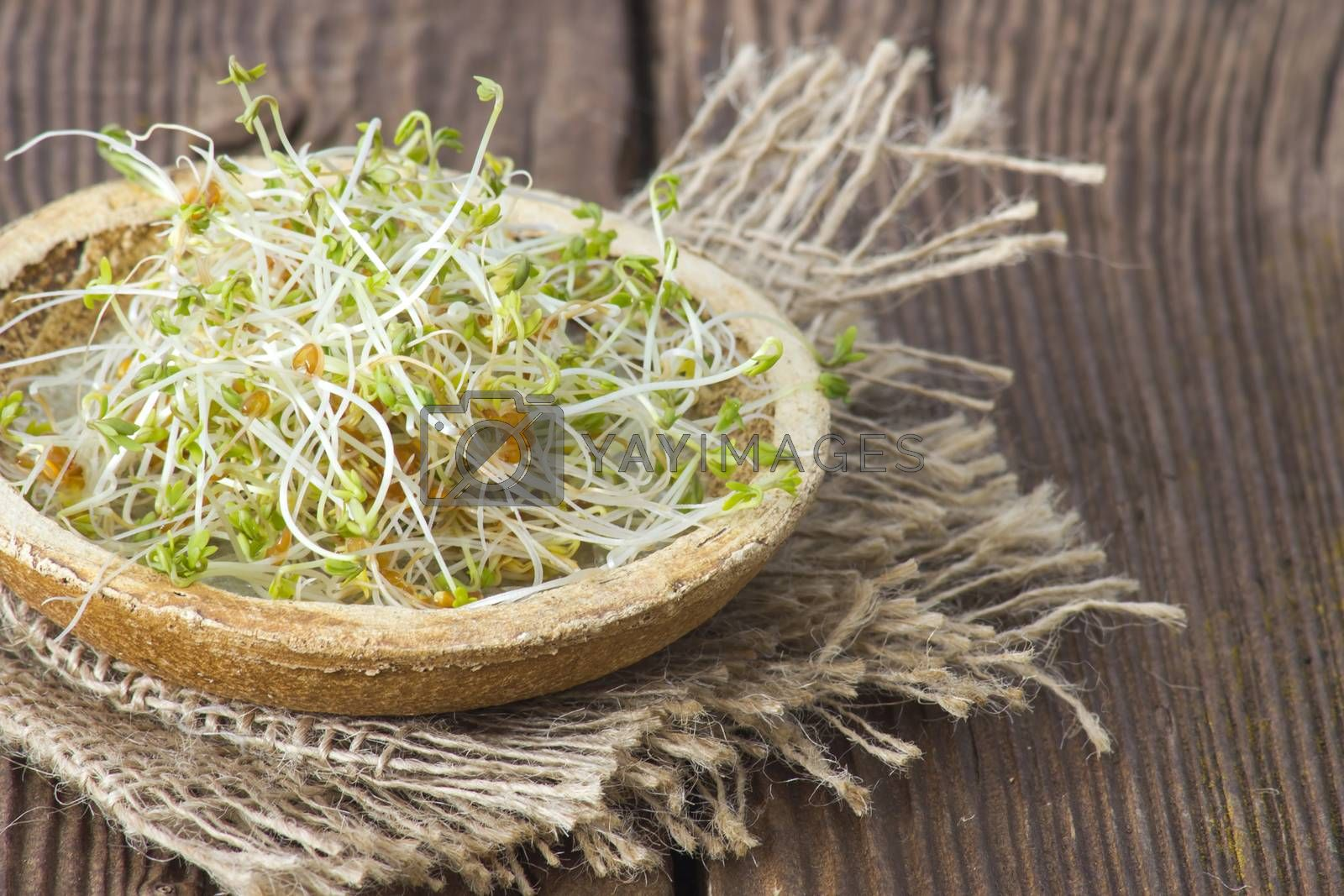 garden cress sprouts by miradrozdowski