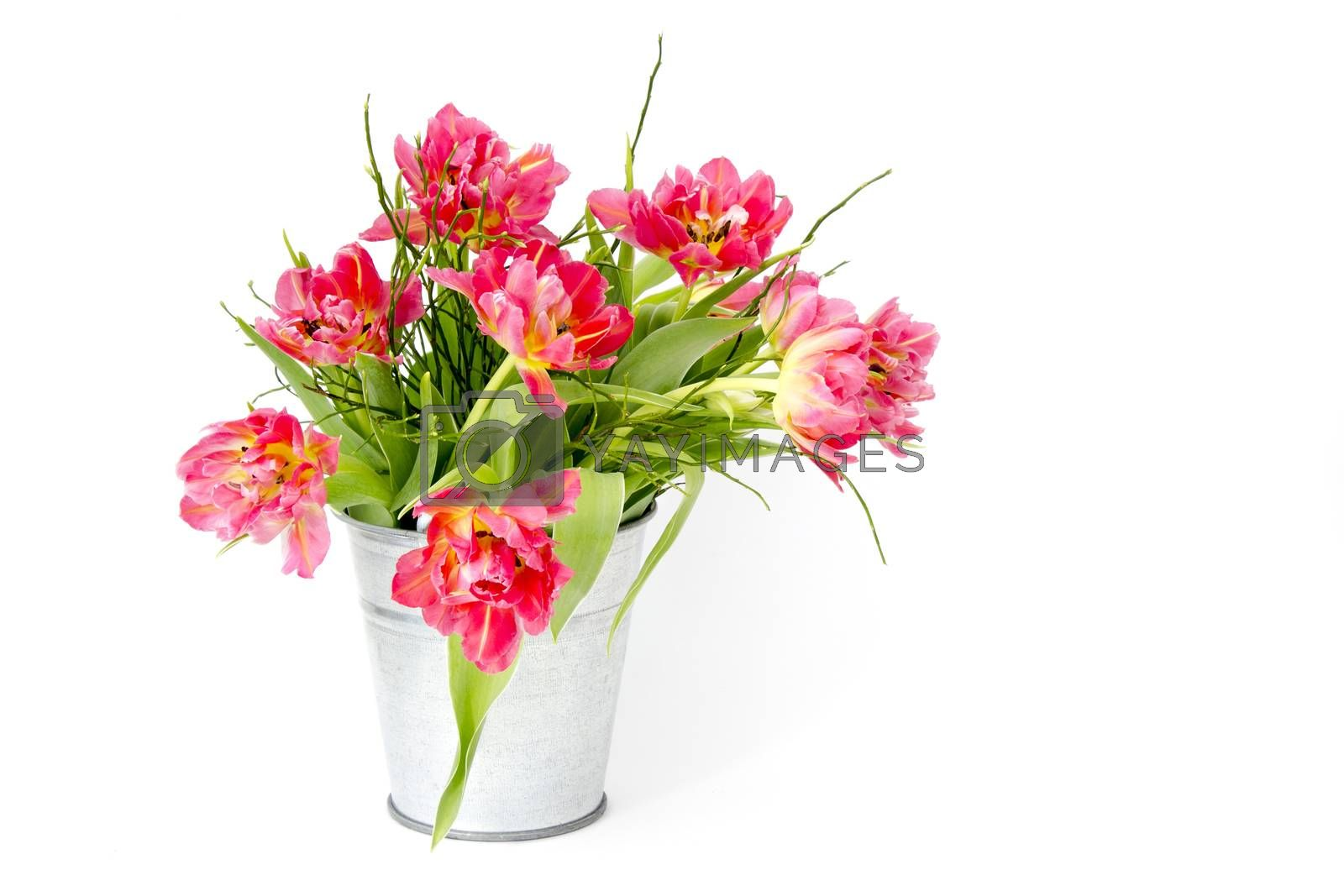 red tulips in a bucket