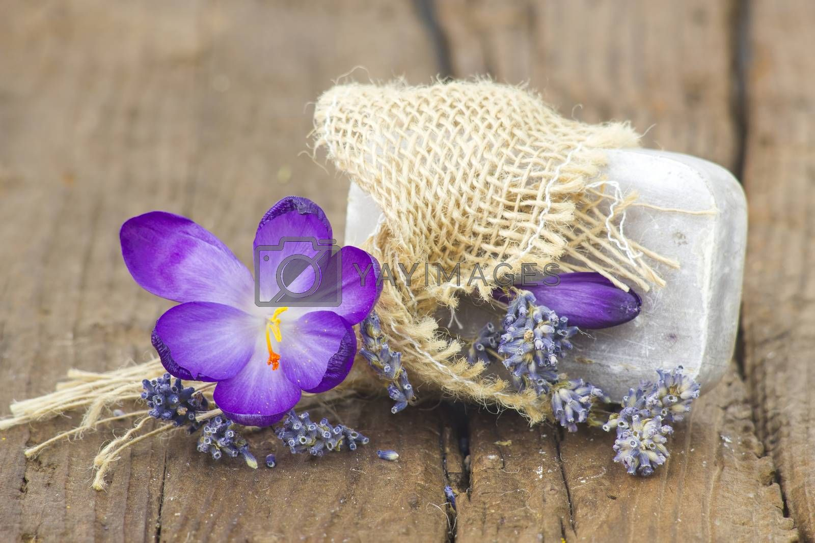 bar of natural soap, dried lavender and crocus