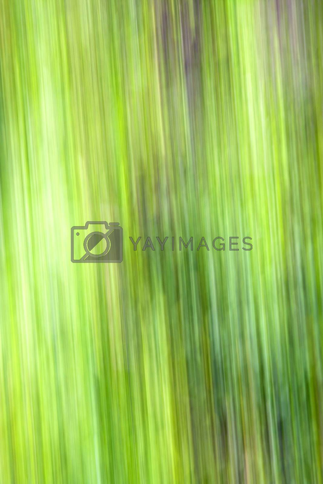 green nature background fast line