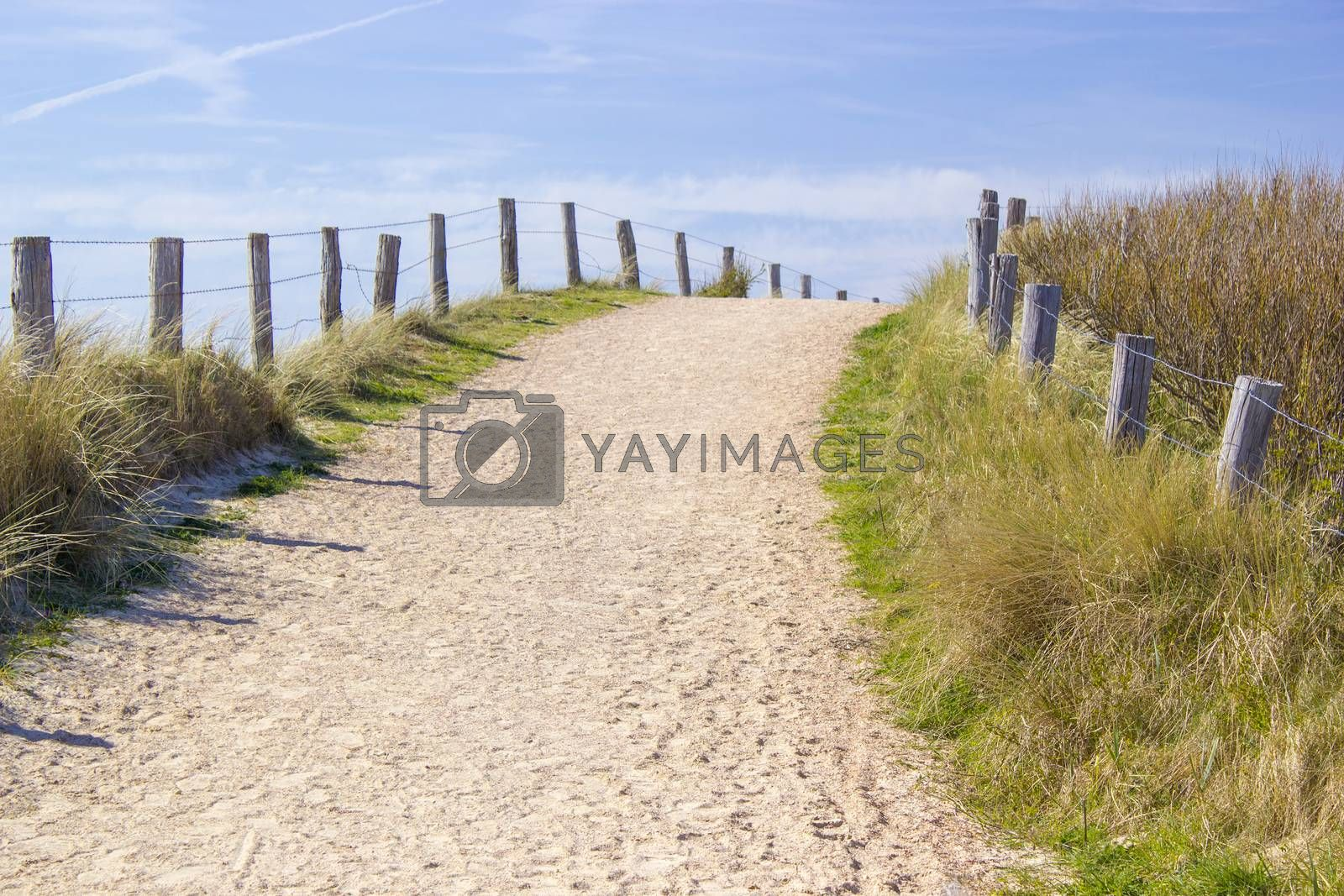 Path trough the dunes, Zoutelande, the Netherlands