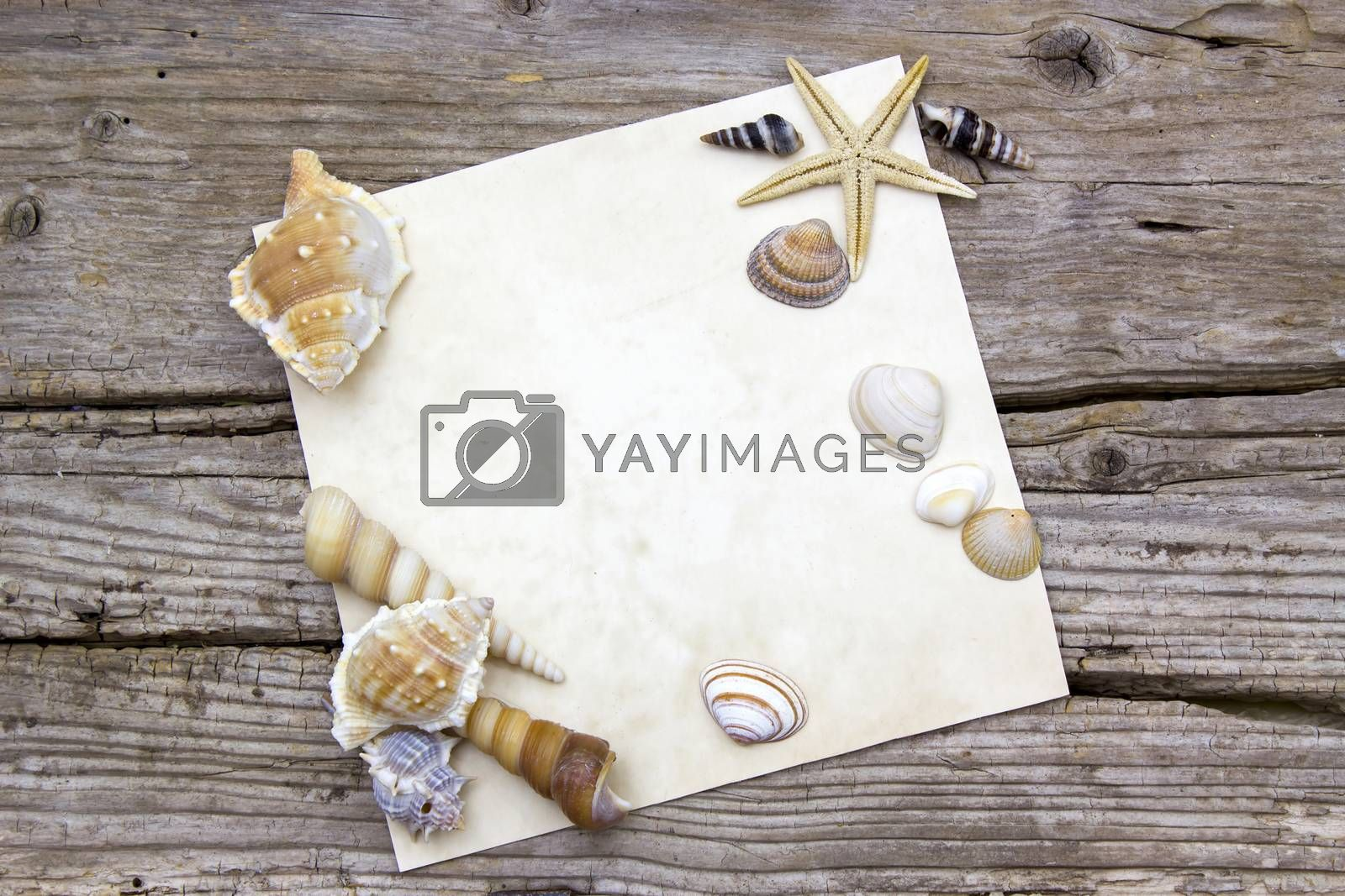 blank paper on wooden background with seashells