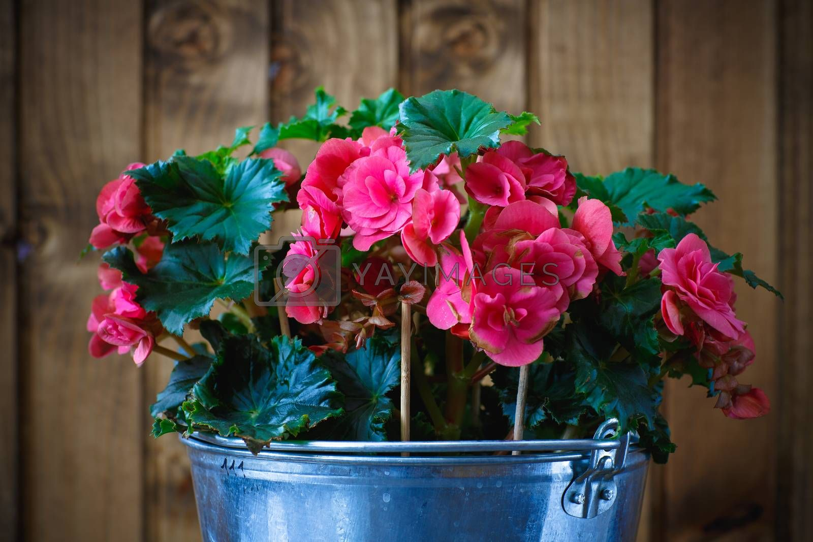 Beautiful flowers on wooden background by mrgarry