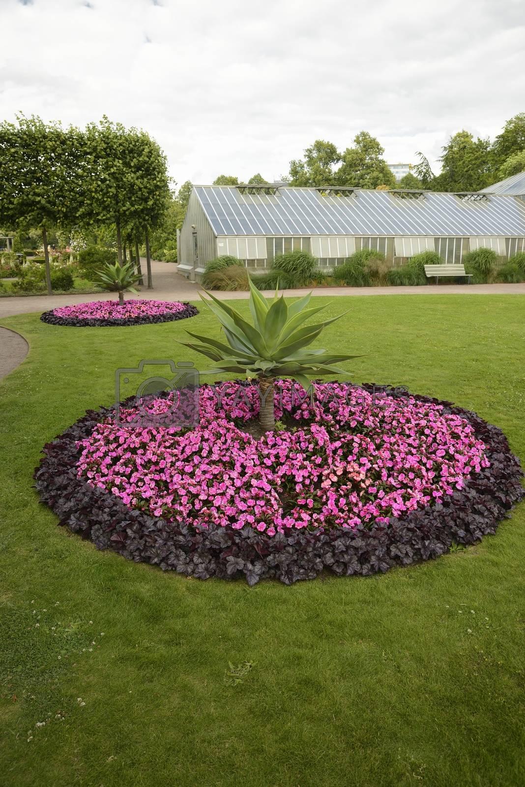 Flowerbed in park