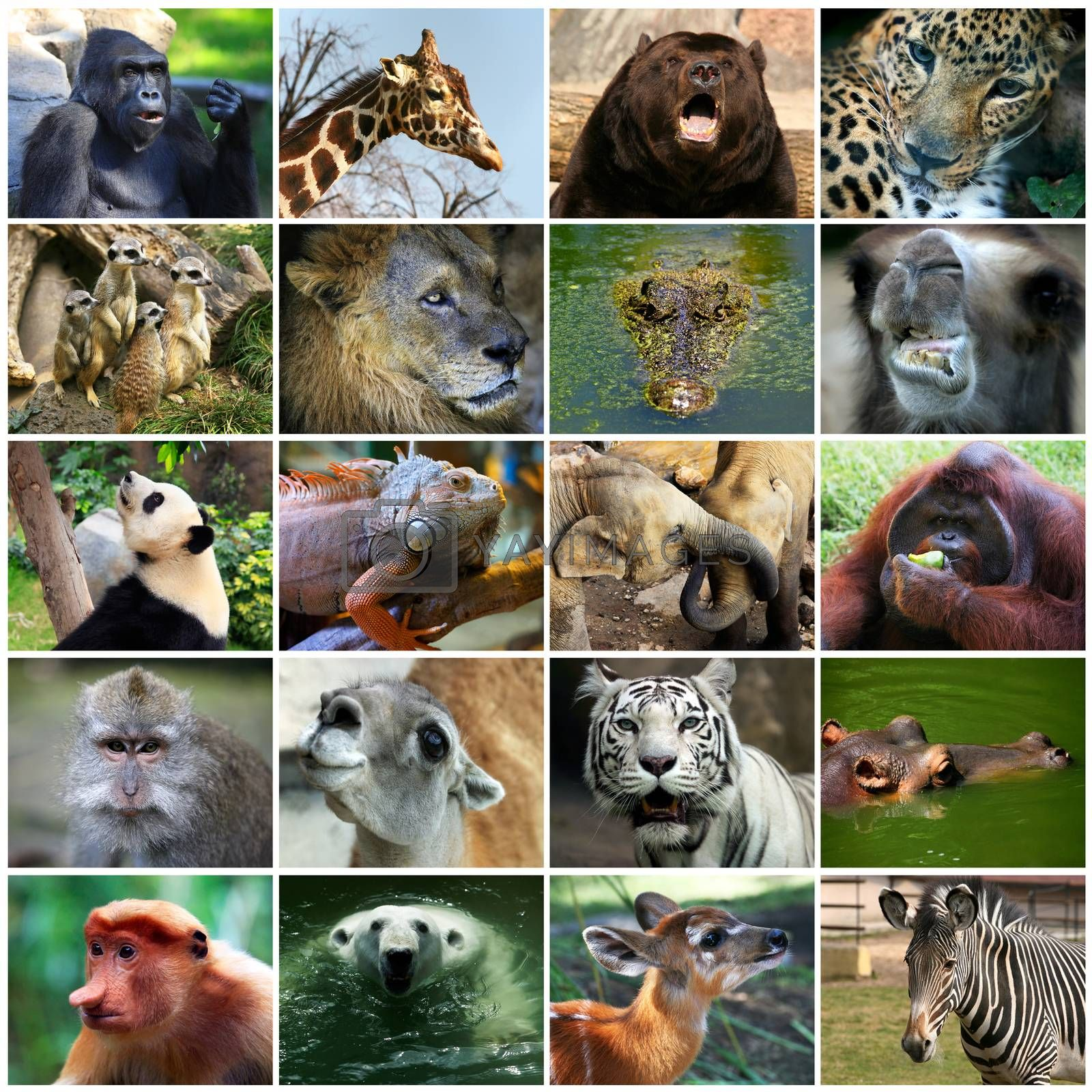 Collage with different animal faces.