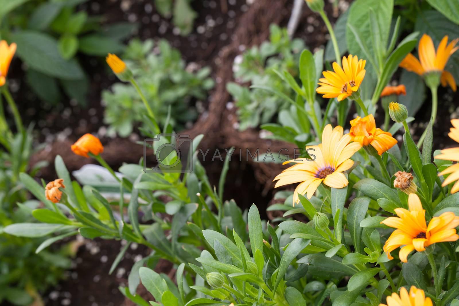 Fresh Orange Flowers by graficallyminded