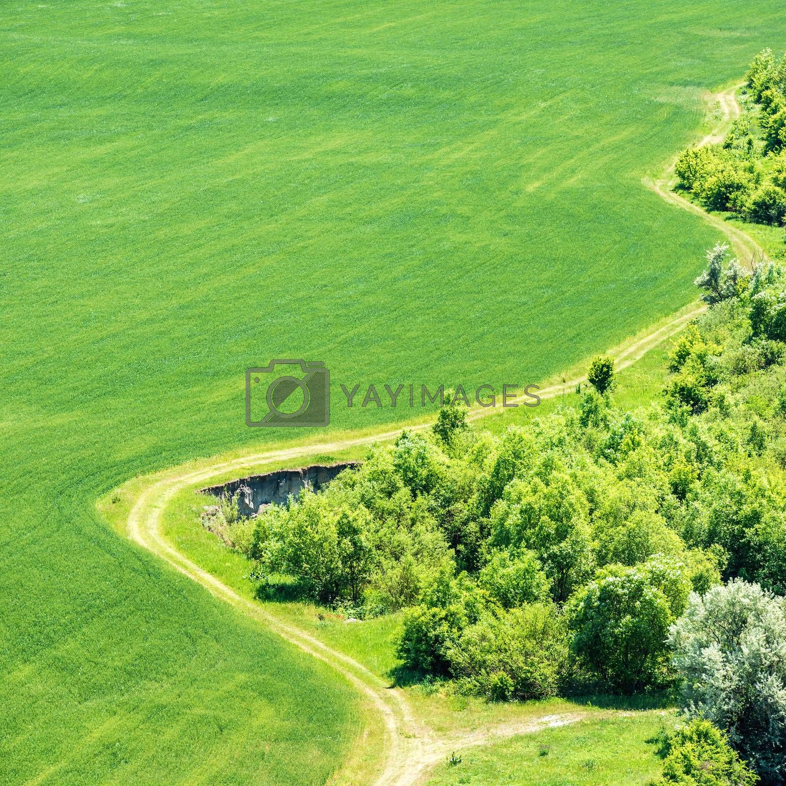 Landscape with green grass field with nearby forest and country road passing by. Aerial view